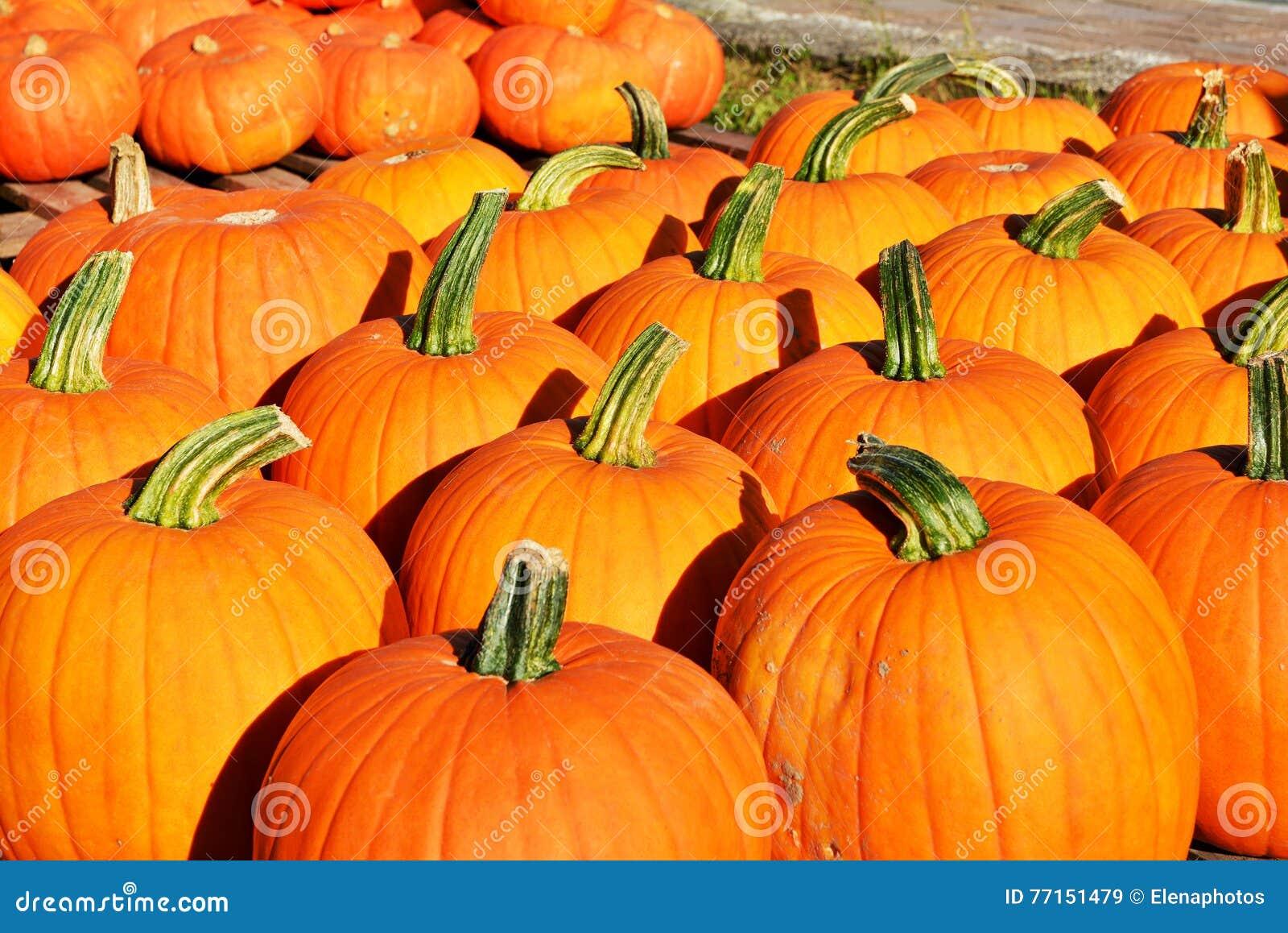 Fond d automne Potirons colorés