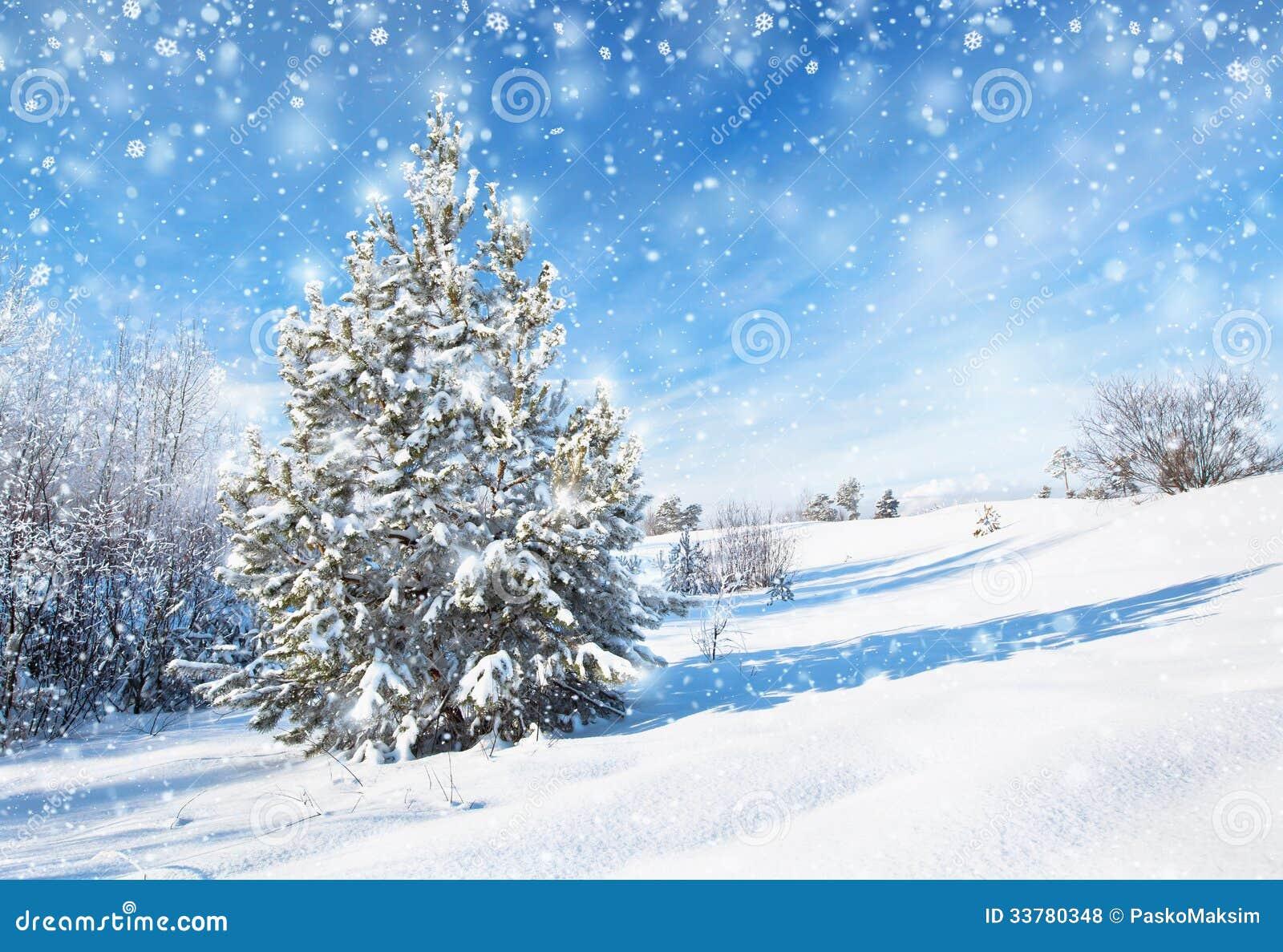 Fond D'hiver Avec Le Sapin Photo Stock. Image Du Conifére