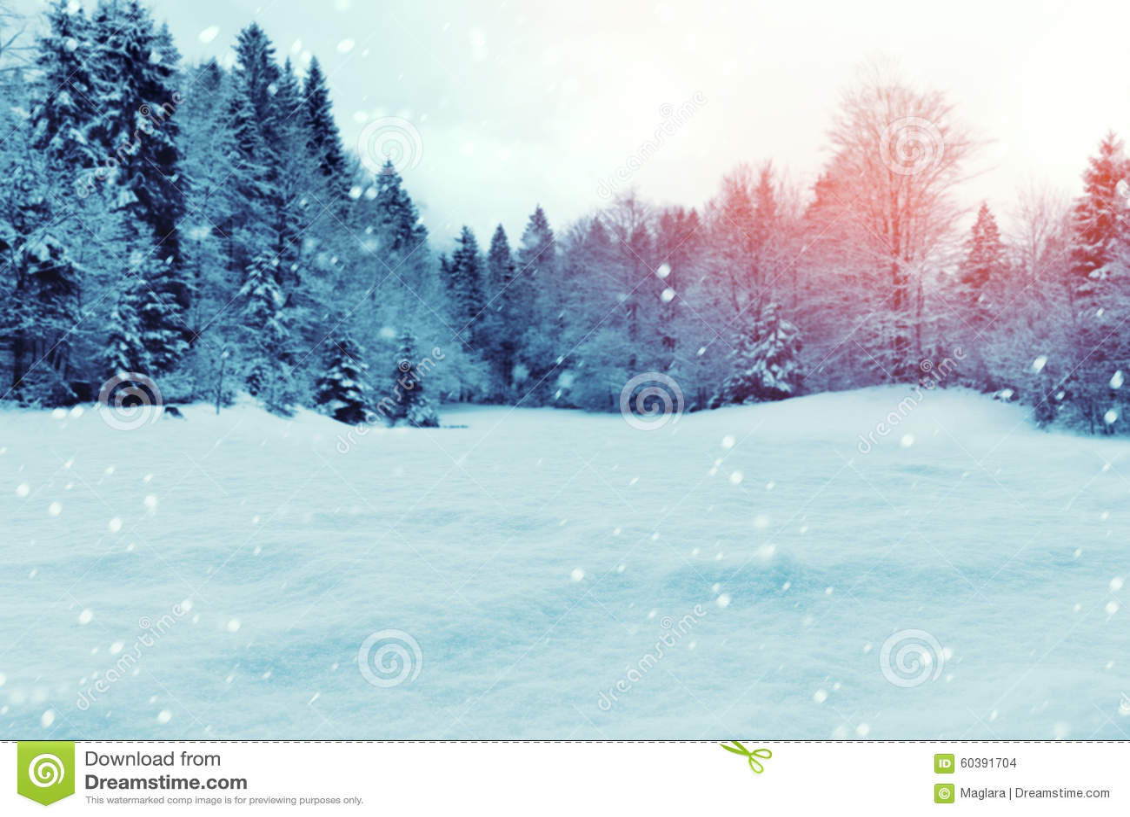 Fond d hiver de Noël avec la neige et les arbres