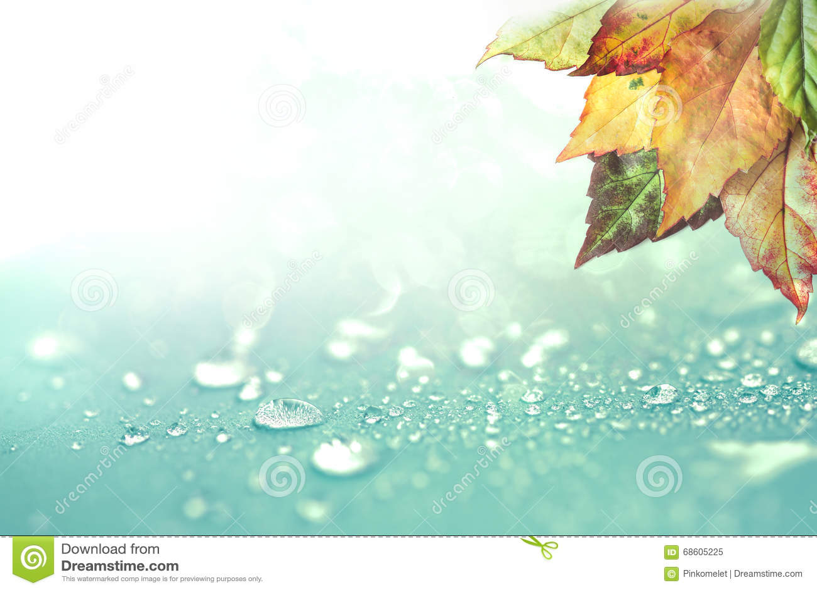 Fond de baisses de feuilles d automne et d eau de pluie
