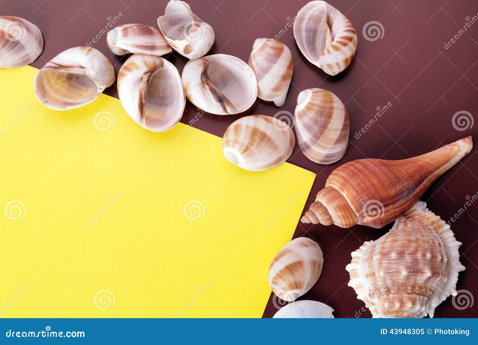 Fond de coquille de mer