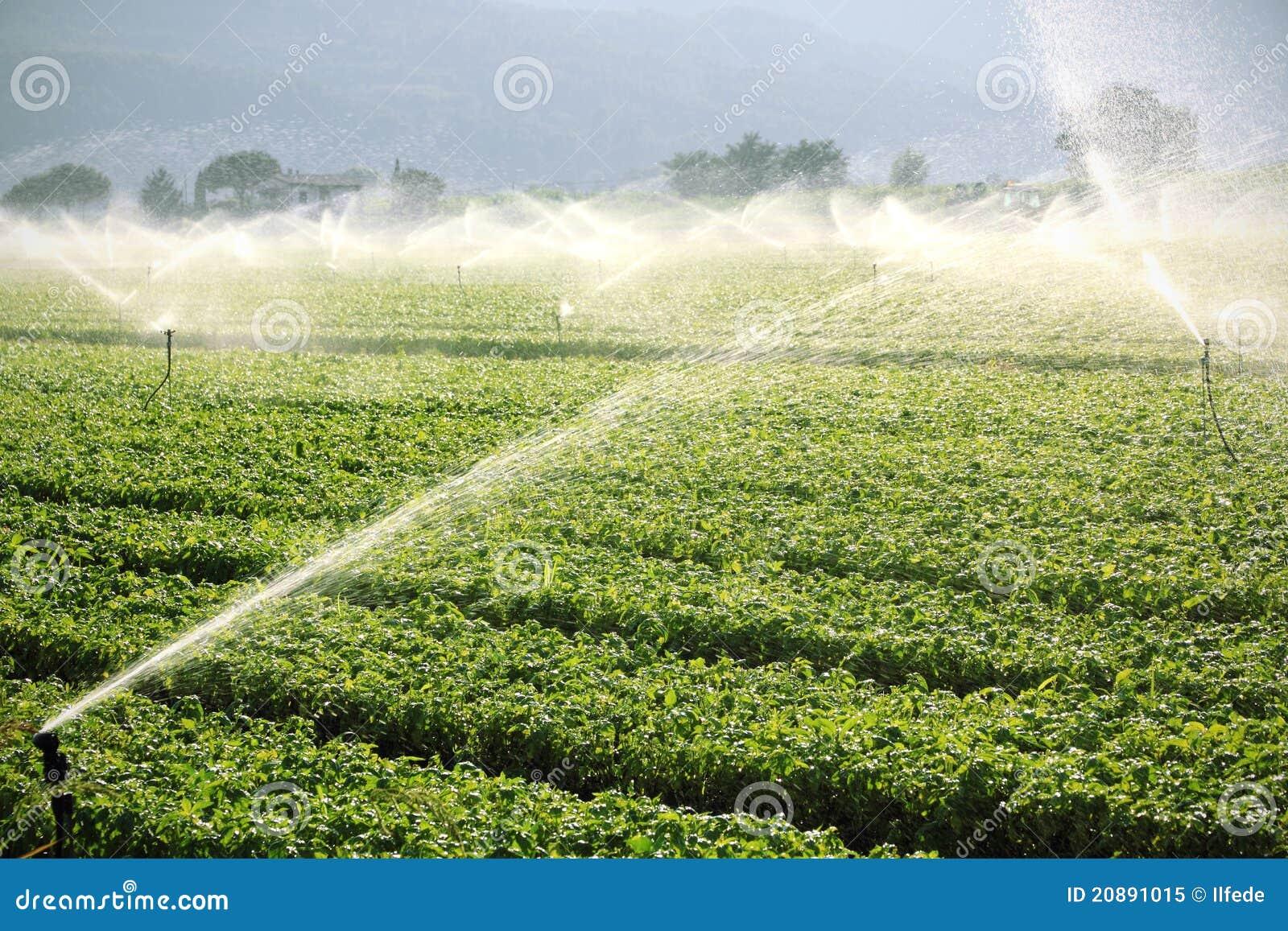 Fond de ferme, système d irrigation