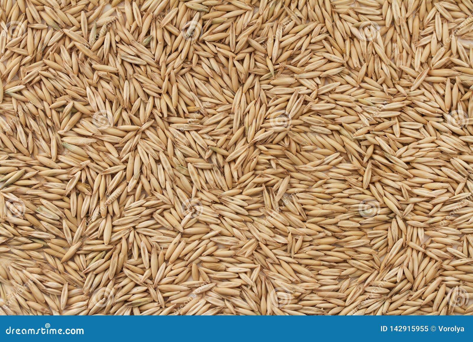 Fond de grain d avoine non épluché