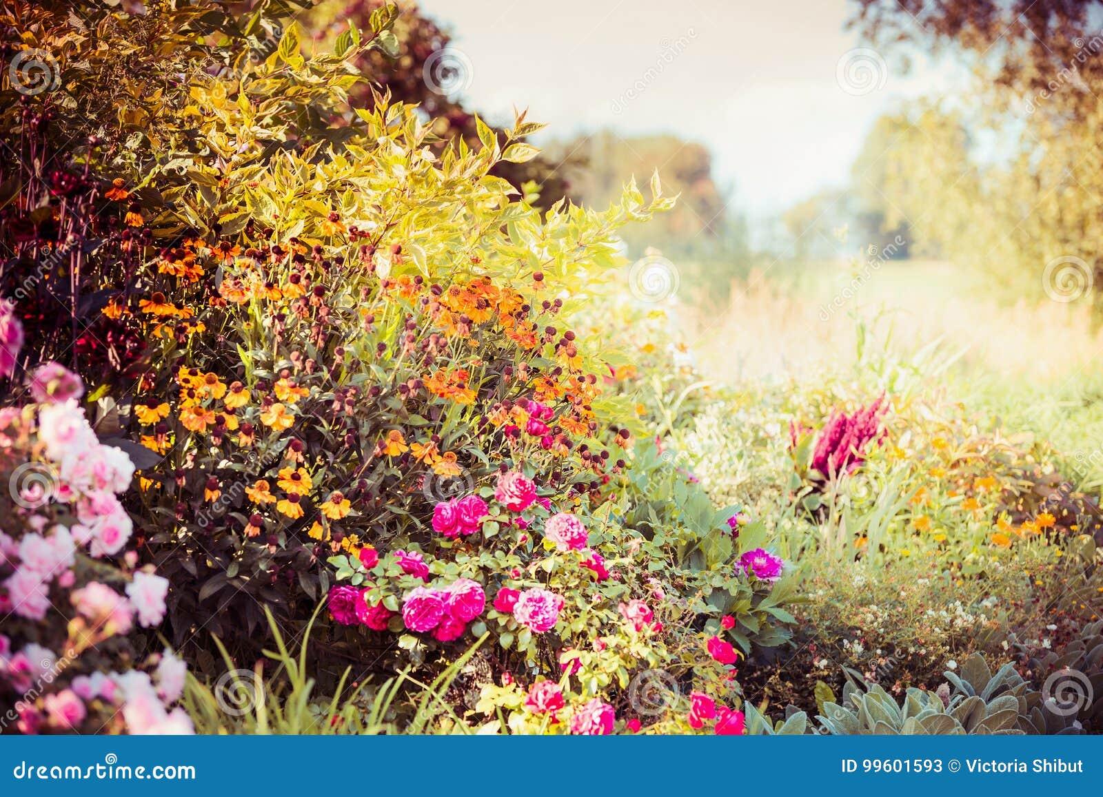 Fond De Jardin D\'automne Avec De Diverses Fleurs De Chute Image ...