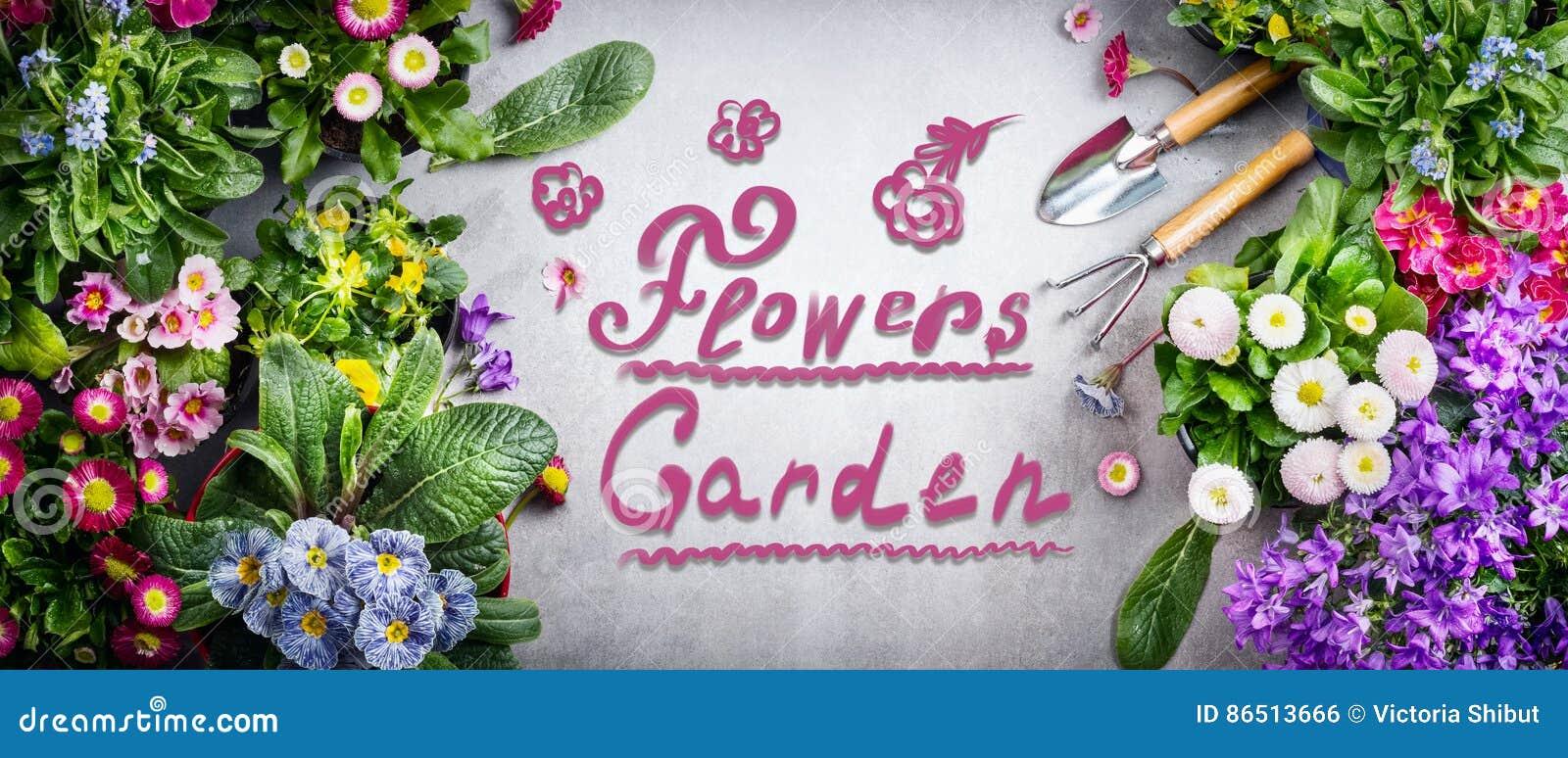 Fond De Jardinage Floral Avec La Variété Des Fleurs De ...