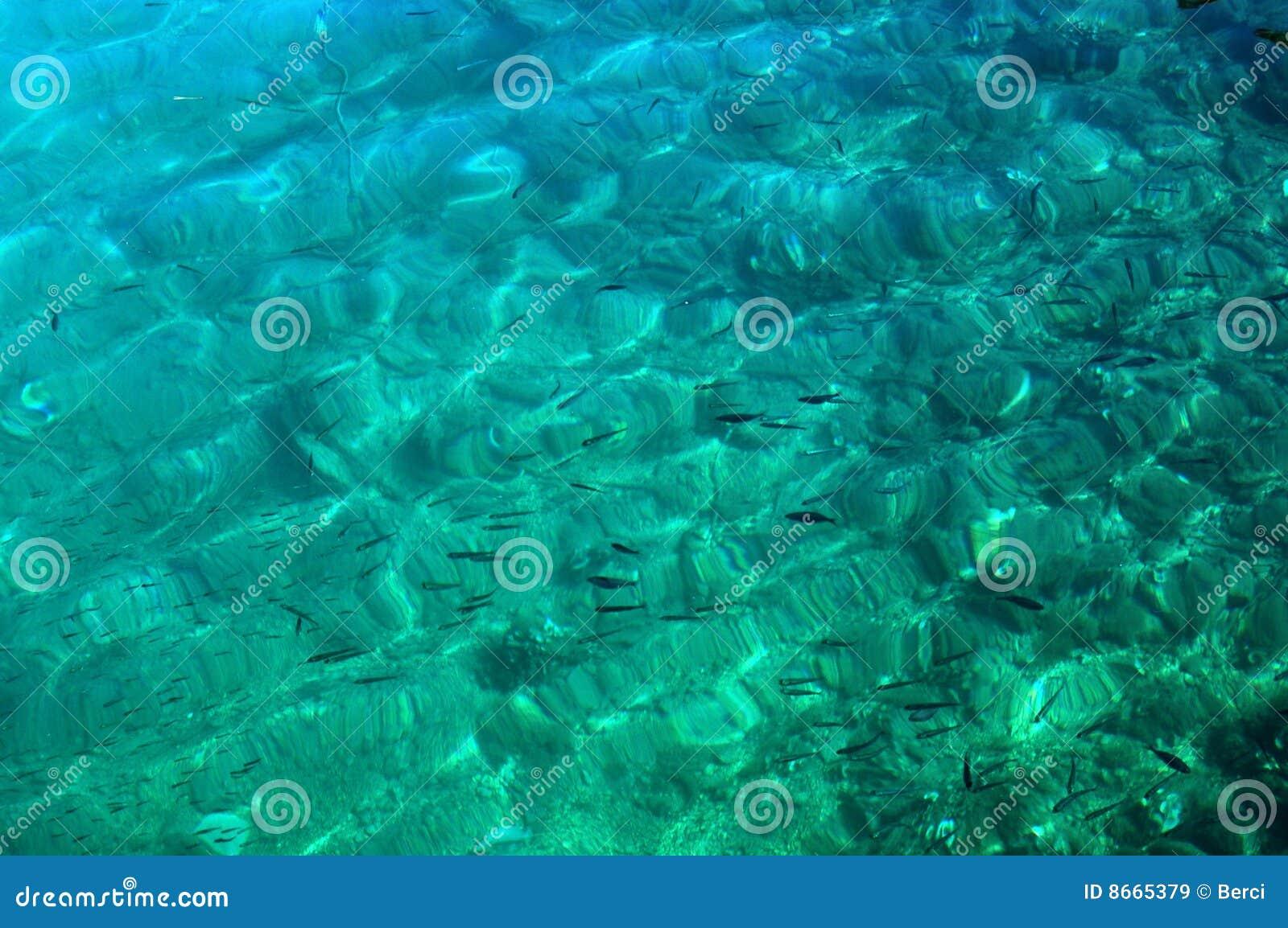 Fond de la mer
