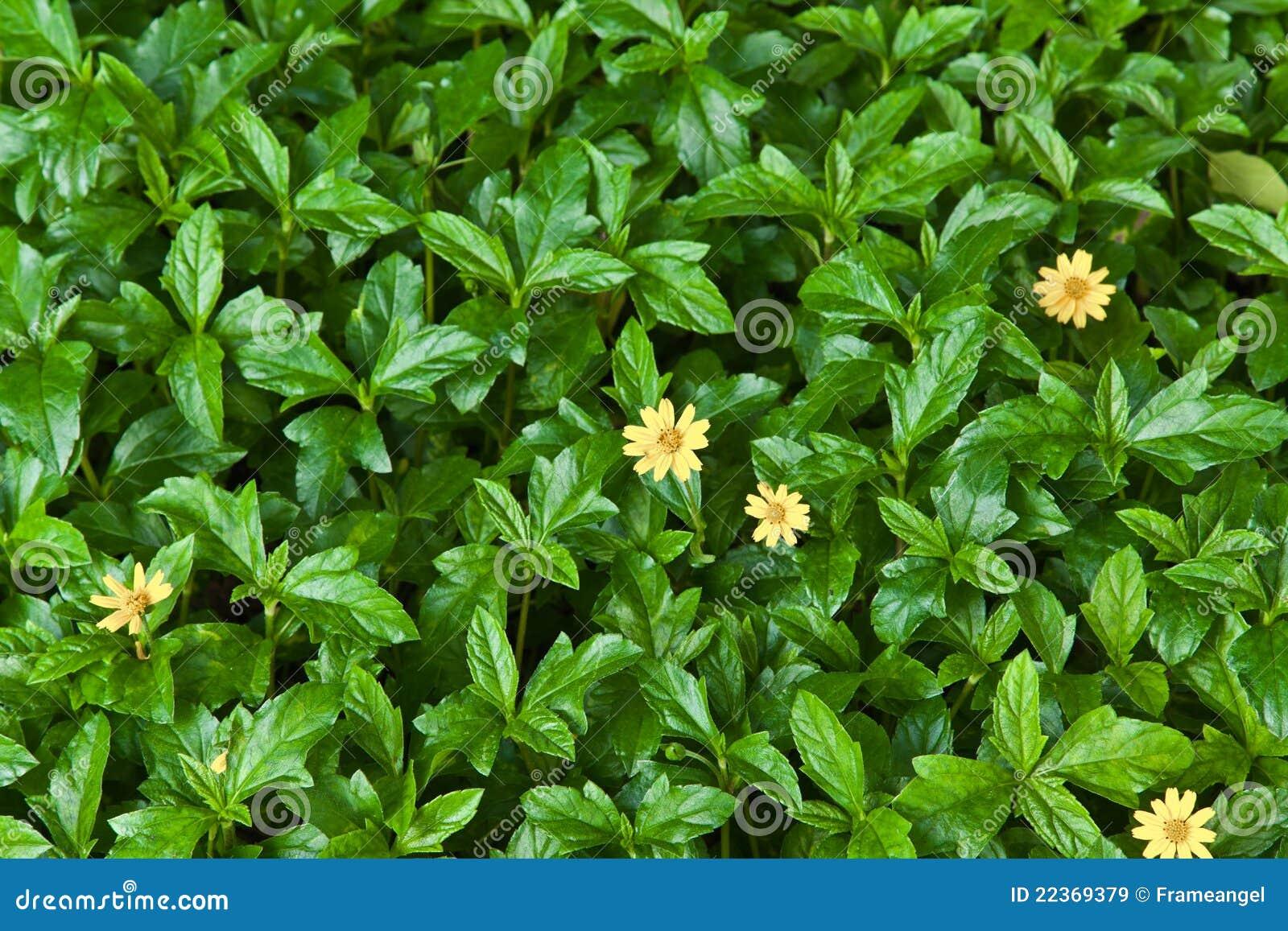 Fond de nature de feuille verte et de fleur jaune image stock image du feuillage floral 22369379 - Initiatives fleurs et nature ...