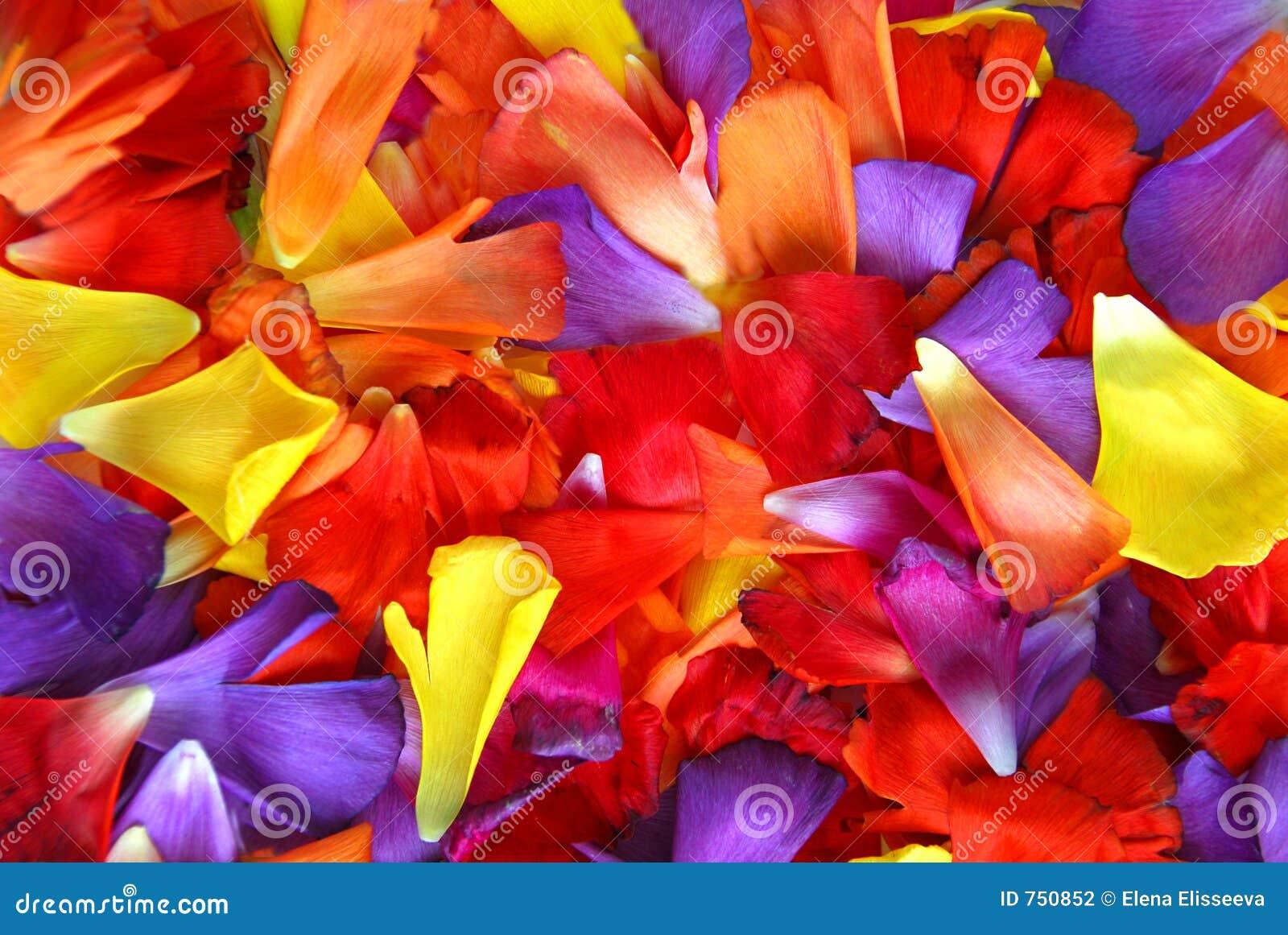 Fond de pétale de fleur