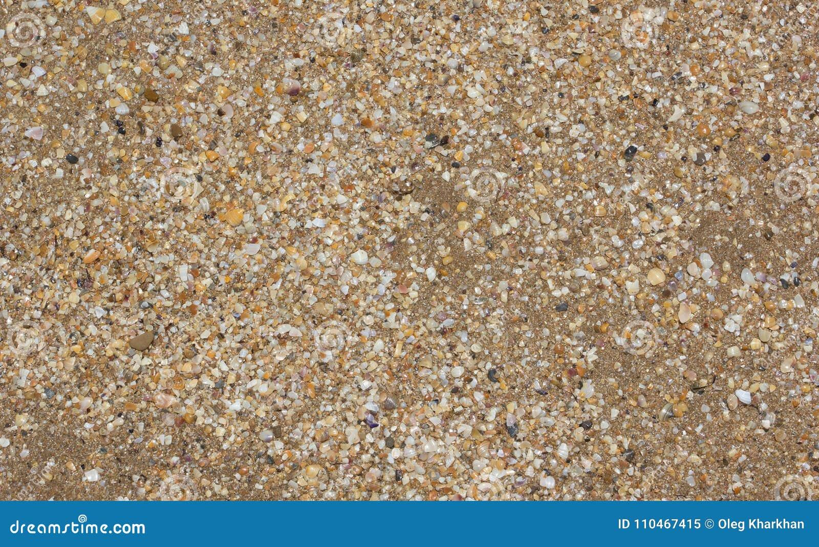 Fond de sable de mer et de coquilles