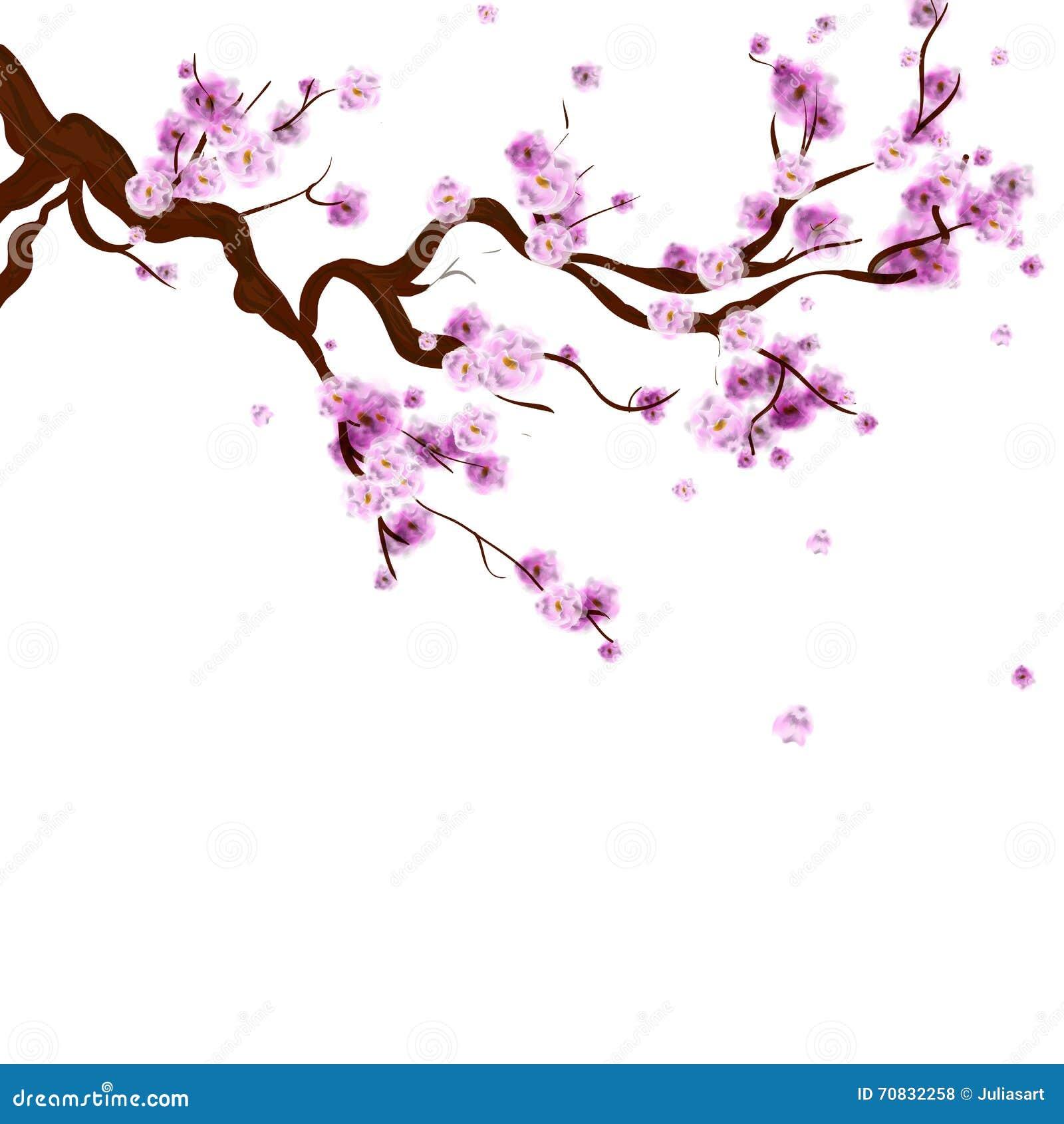 Branche De Cerisier fond de sakura d'aquarelle avec la branche de cerisier de fleur ha