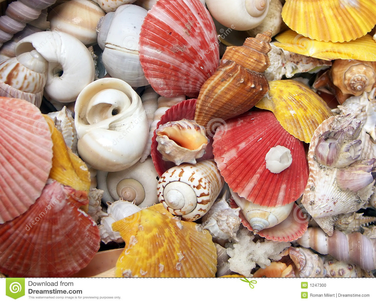 Fond de Seashell