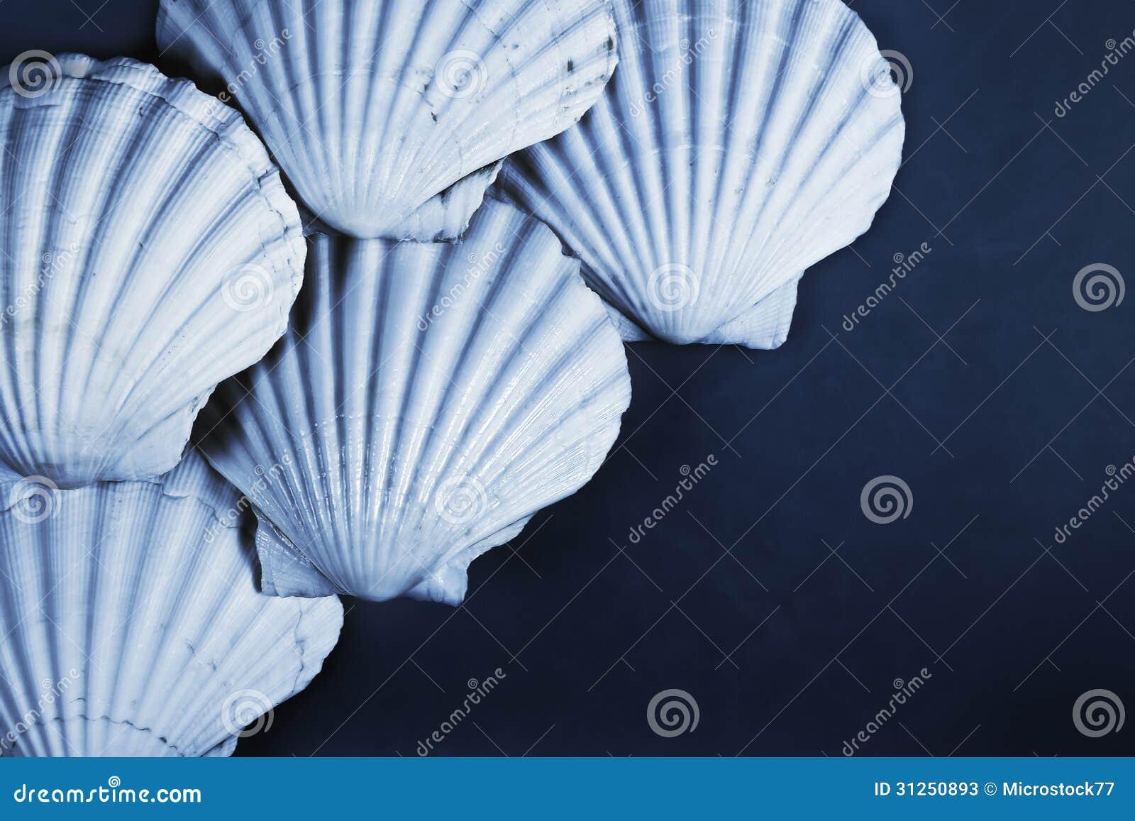 Fond de Shell