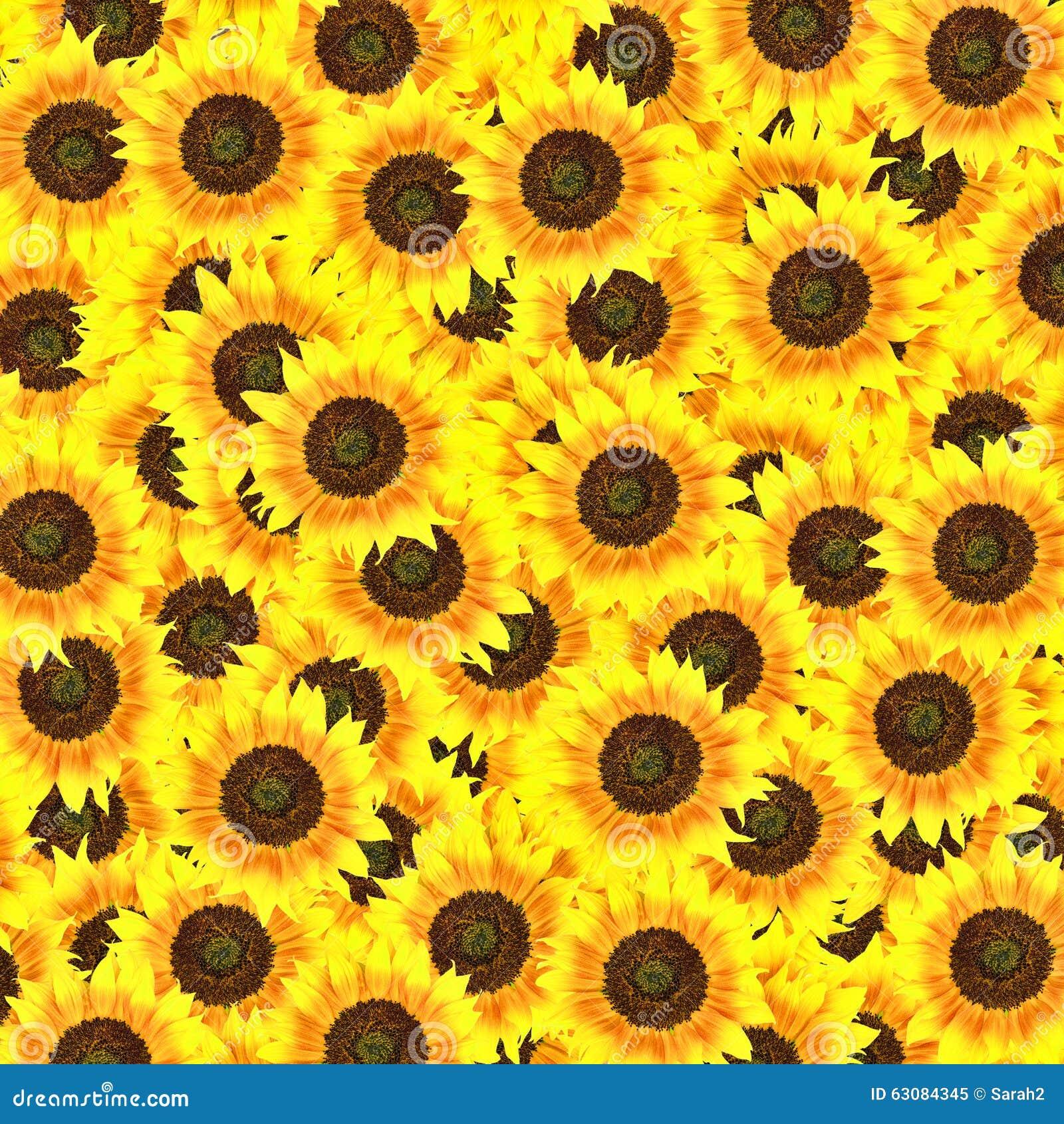 Download Fond de tournesol image stock. Image du effectué, floral - 63084345