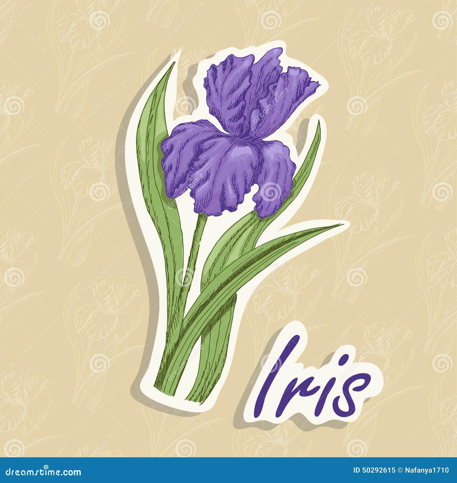 Fond de vecteur avec une fleur illustration de dessin de - Une fleur dessin ...