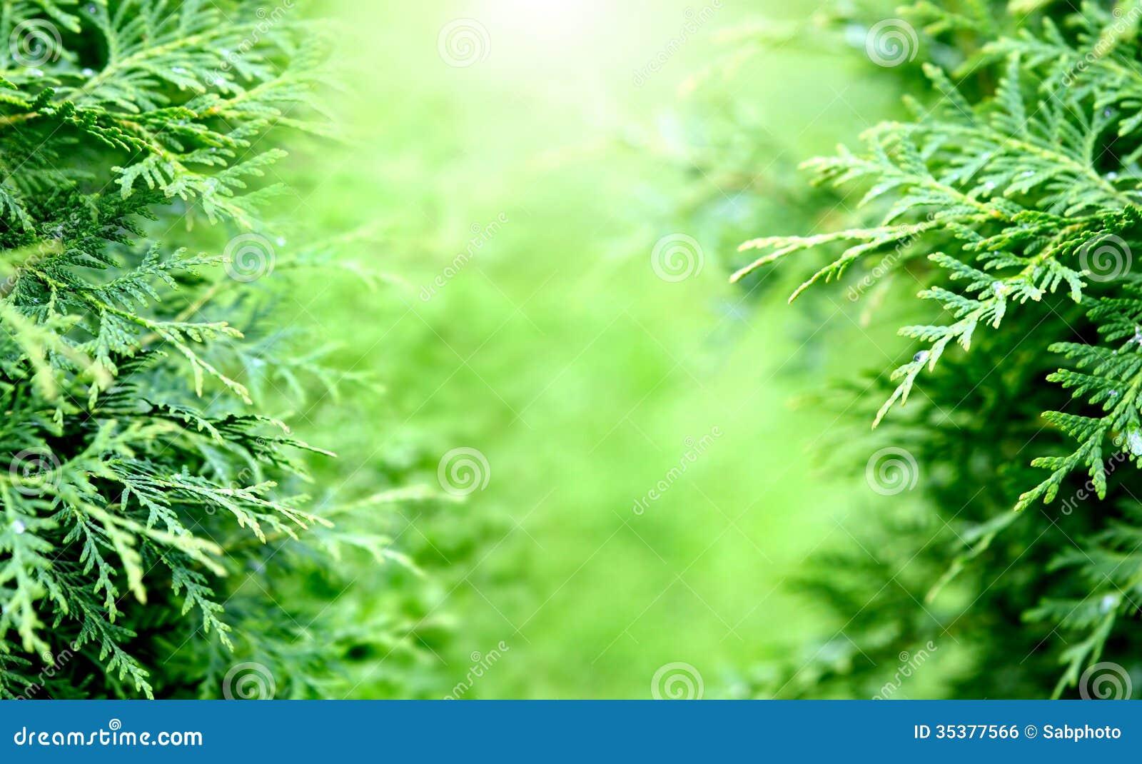 fond de verdure image libre de droits image 35377566