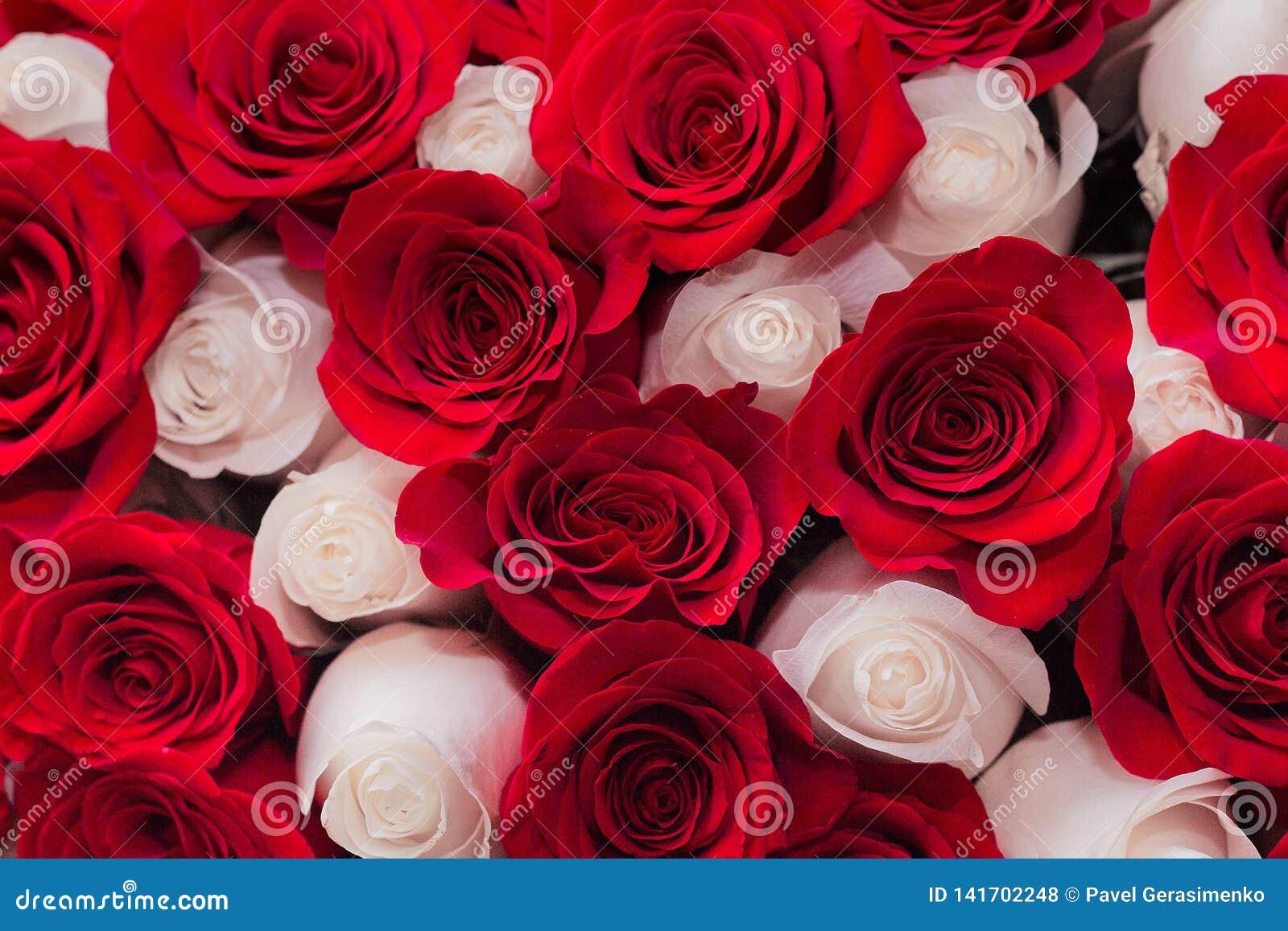 Fond des roses rouges et blanches