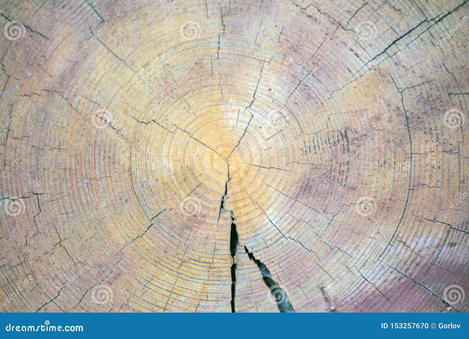 Fond en bois pointu naturel de souche