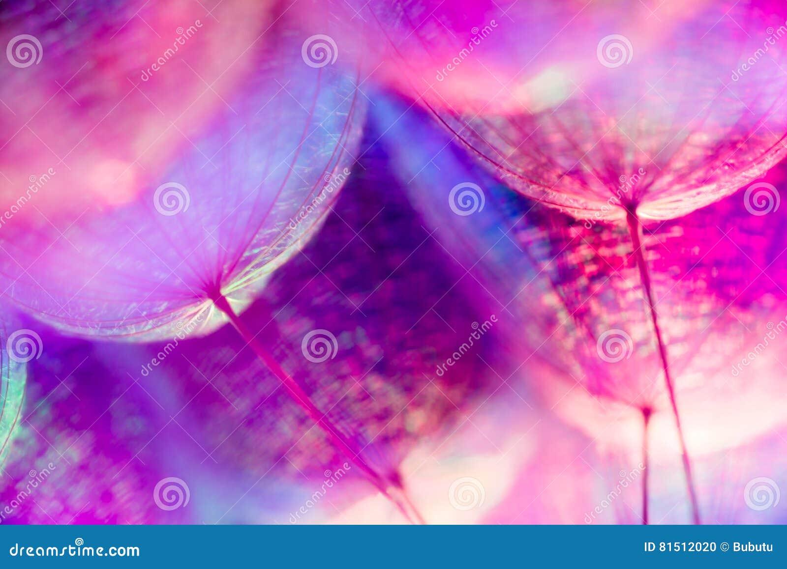 Fond en pastel coloré - fleur abstraite vive de pissenlit