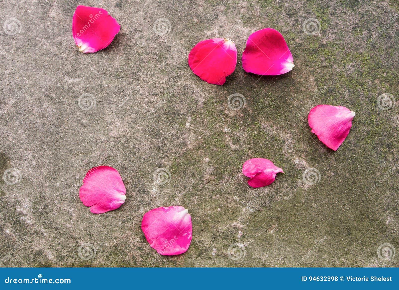 Fond En Pierre Avec De La Mousse Et Les Petales De Rose Roses Fonces