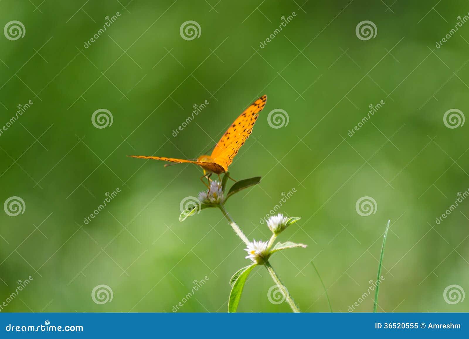 Fond et papillon verts