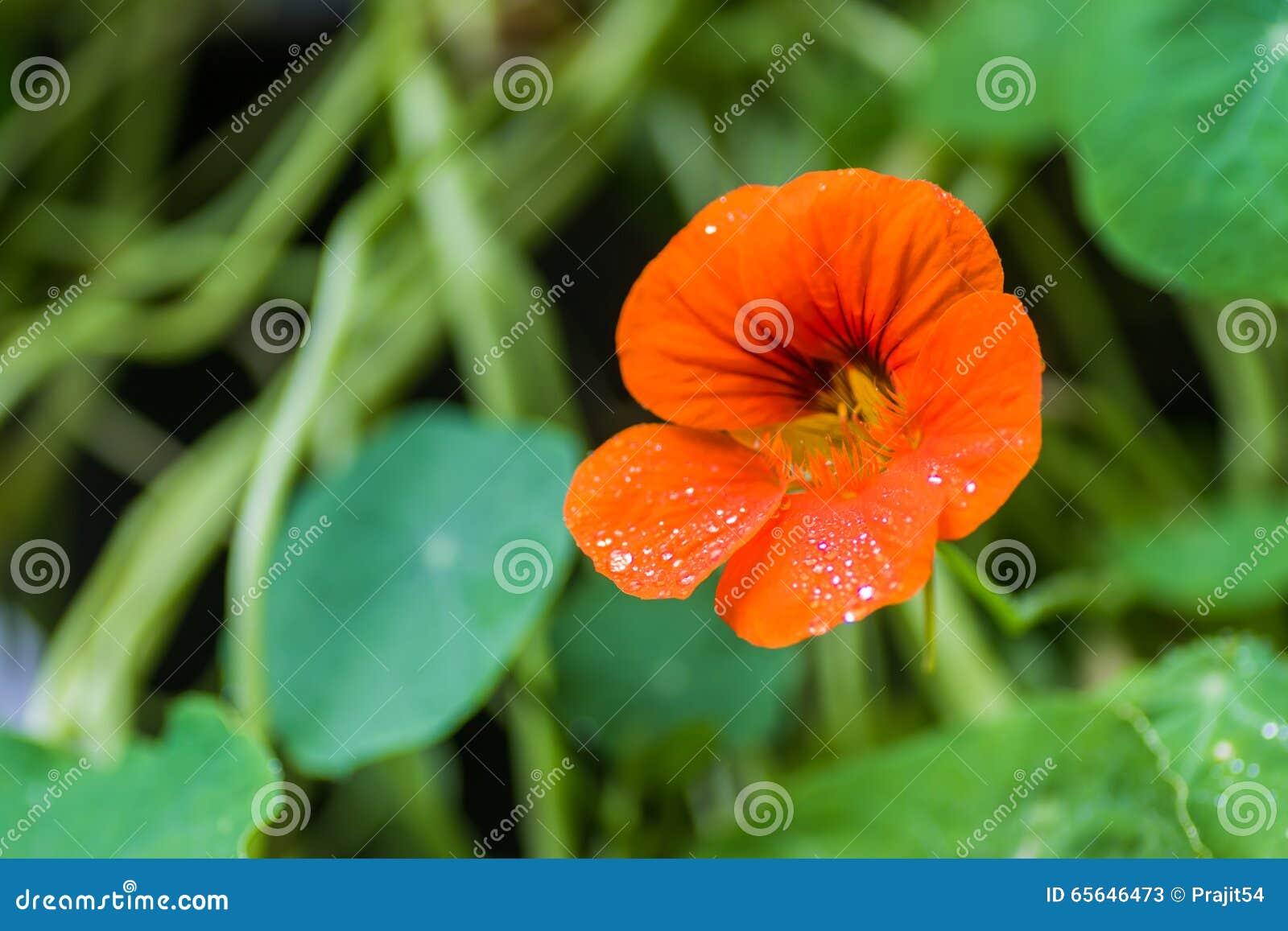 Fond floral de la fleur Garden
