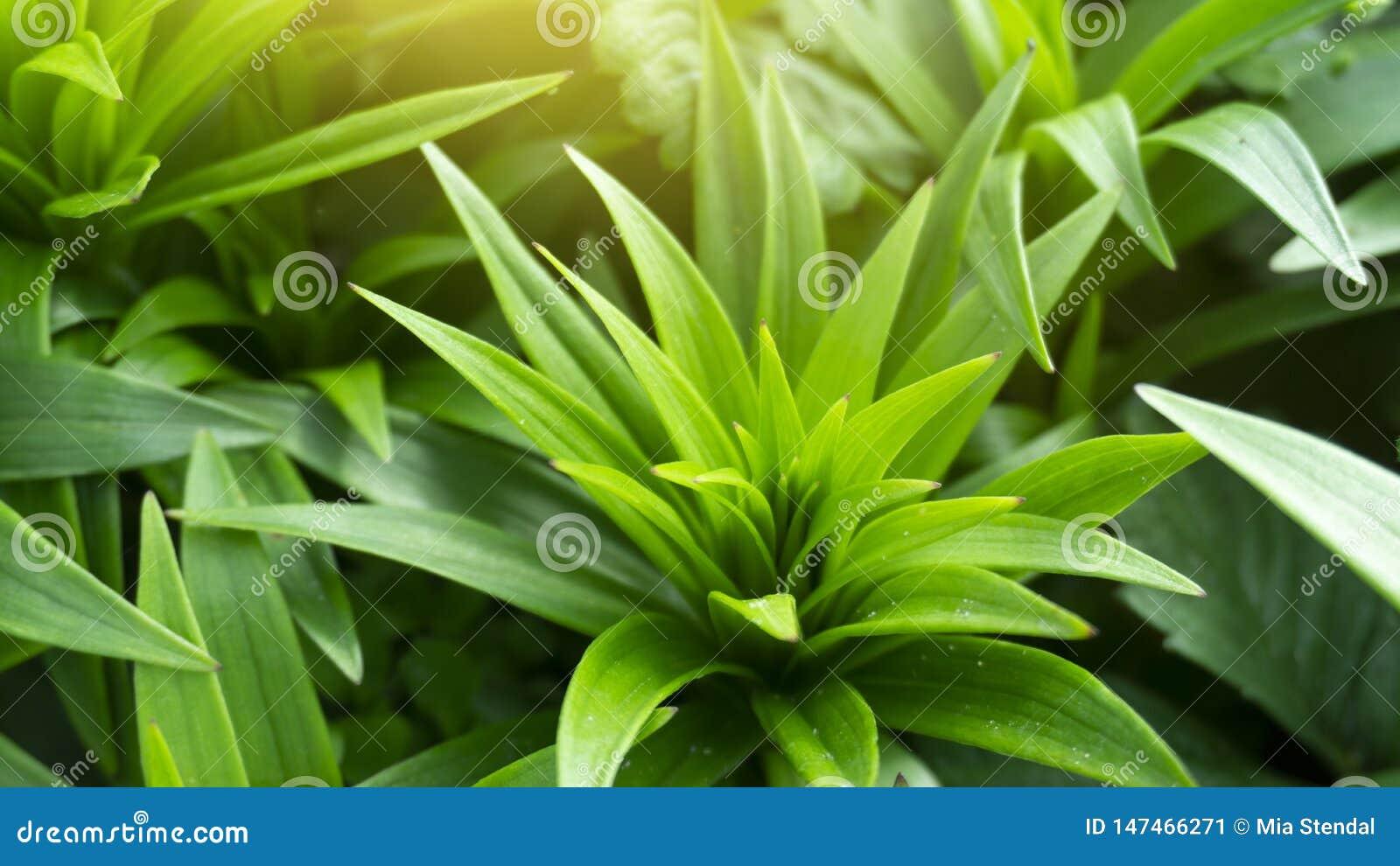 Fond floral floral Fond vert avec des fleurs