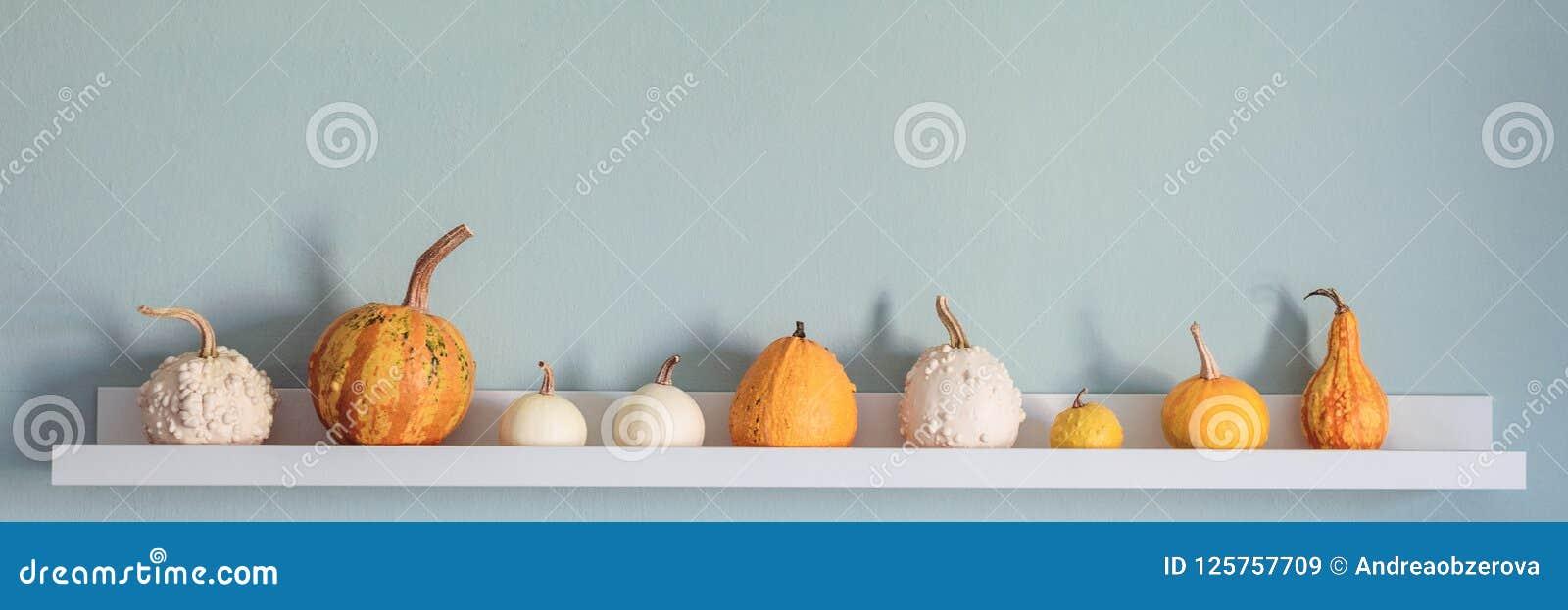 Fond heureux d action de grâces La sélection de divers potirons sur l étagère blanche contre la turquoise en pastel a coloré le m