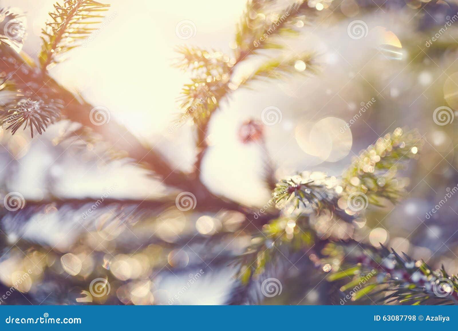 Download Fond Indistinct Avec Des Branches De Sapin Photo stock - Image du beau, mélèze: 63087798