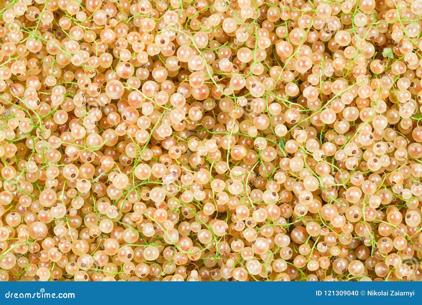 Fond juteux blanc de groseilles