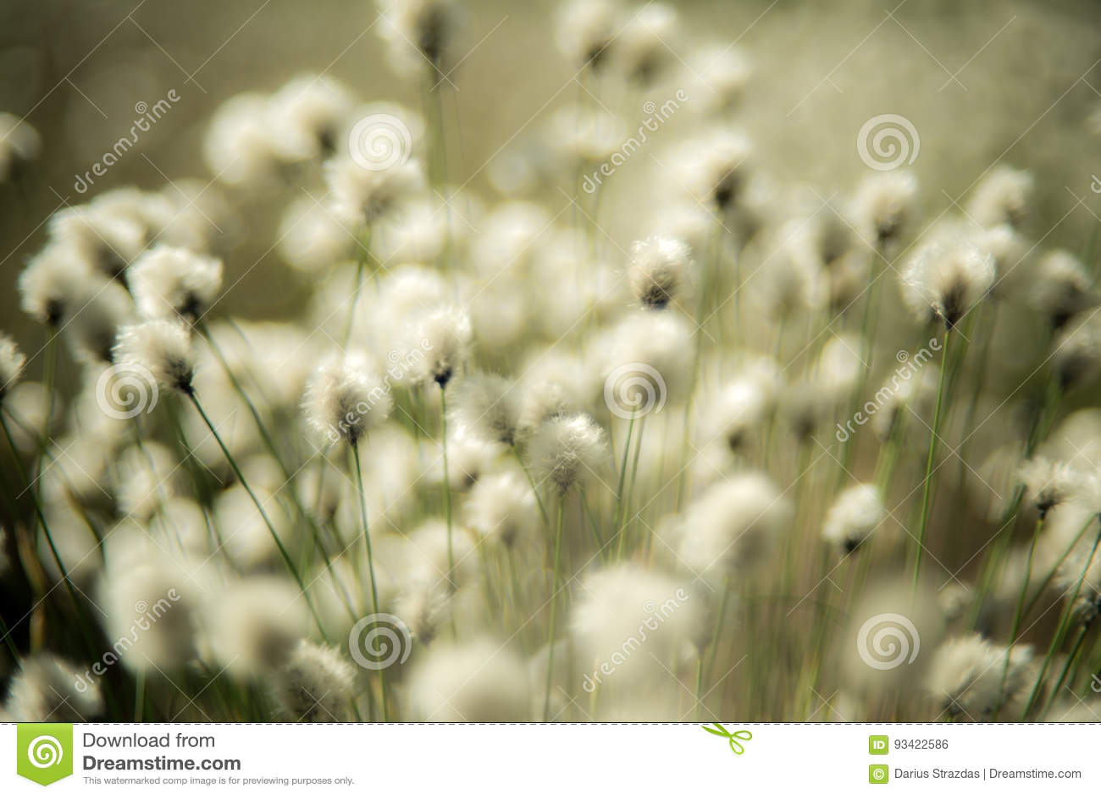 Fond mou d usine d herbe