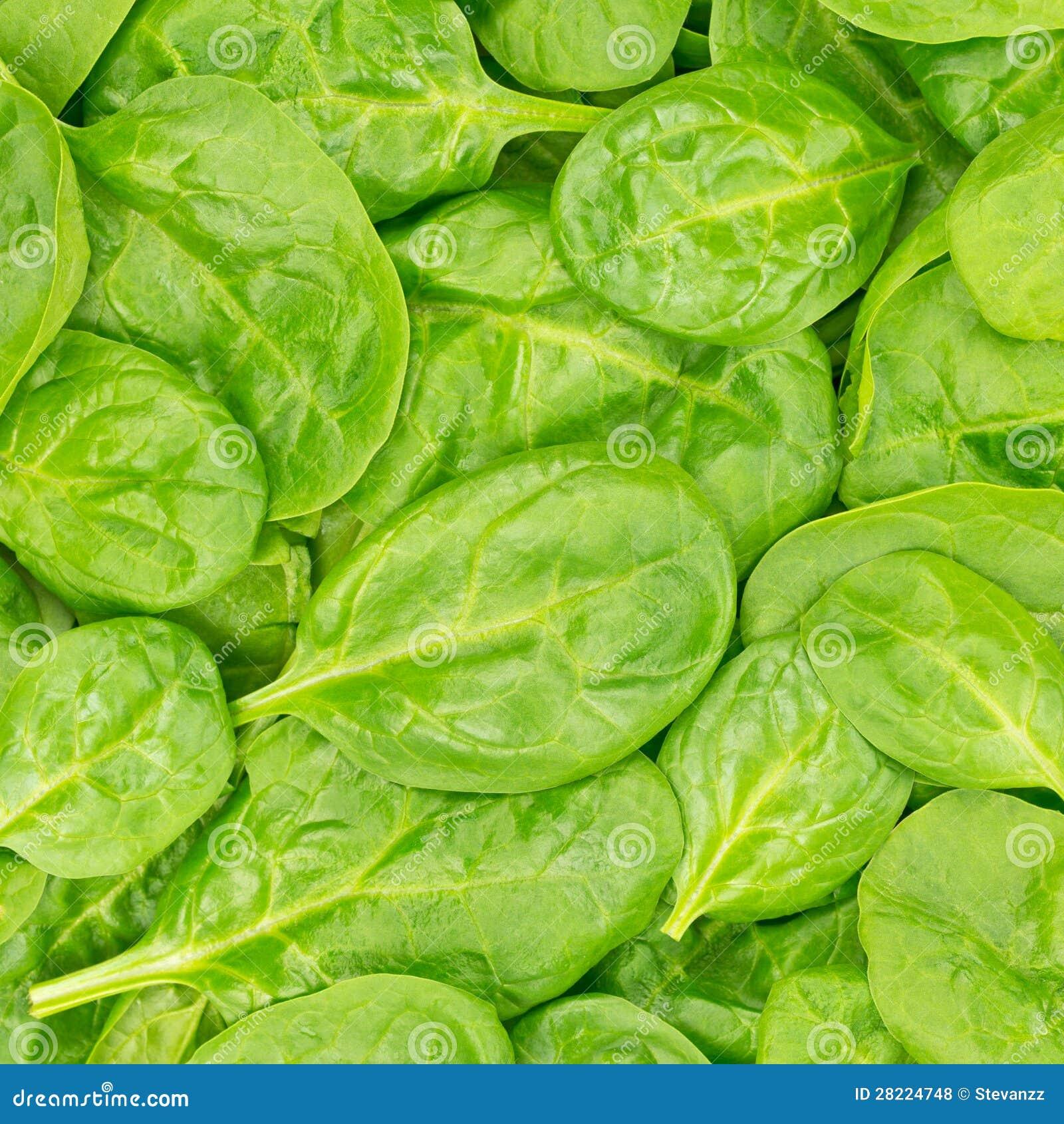Fond ou texture organique frais d épinards de chéri. Nourriture crue.