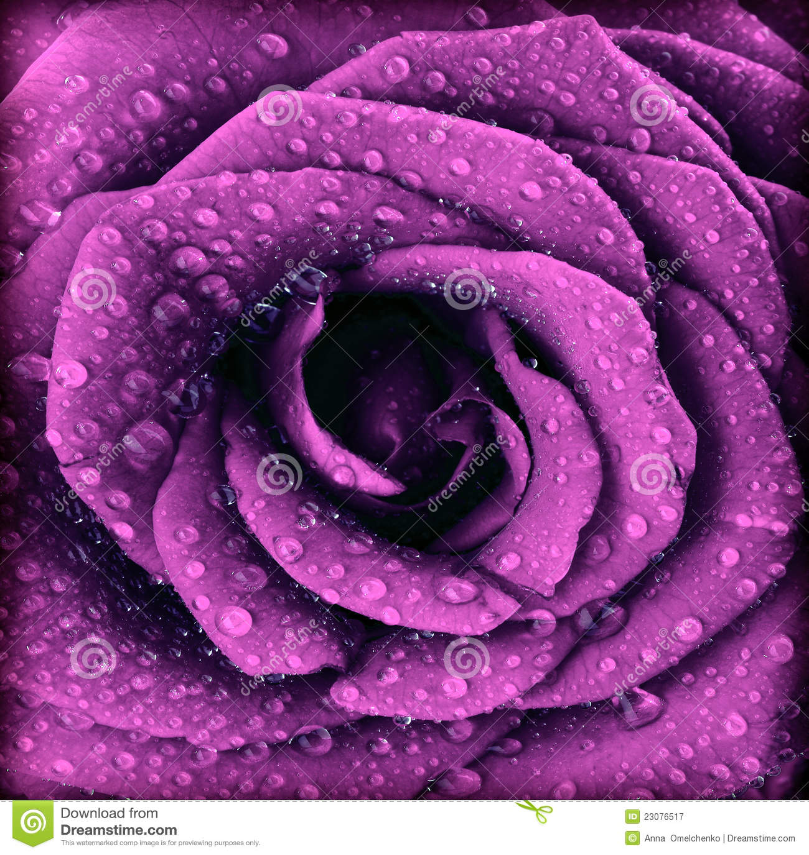Fond rose d obscurité pourprée