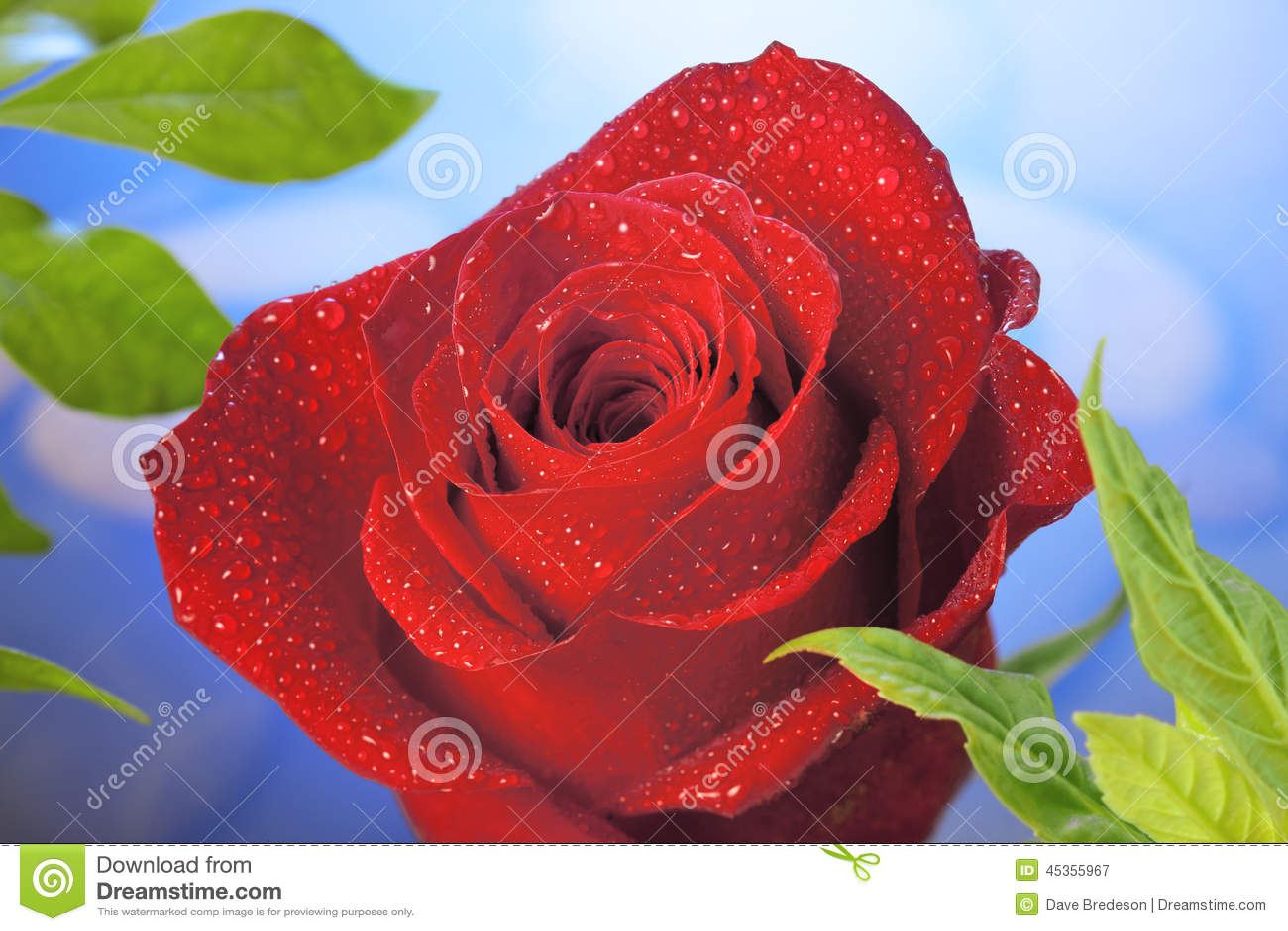 Fond rose de rouge
