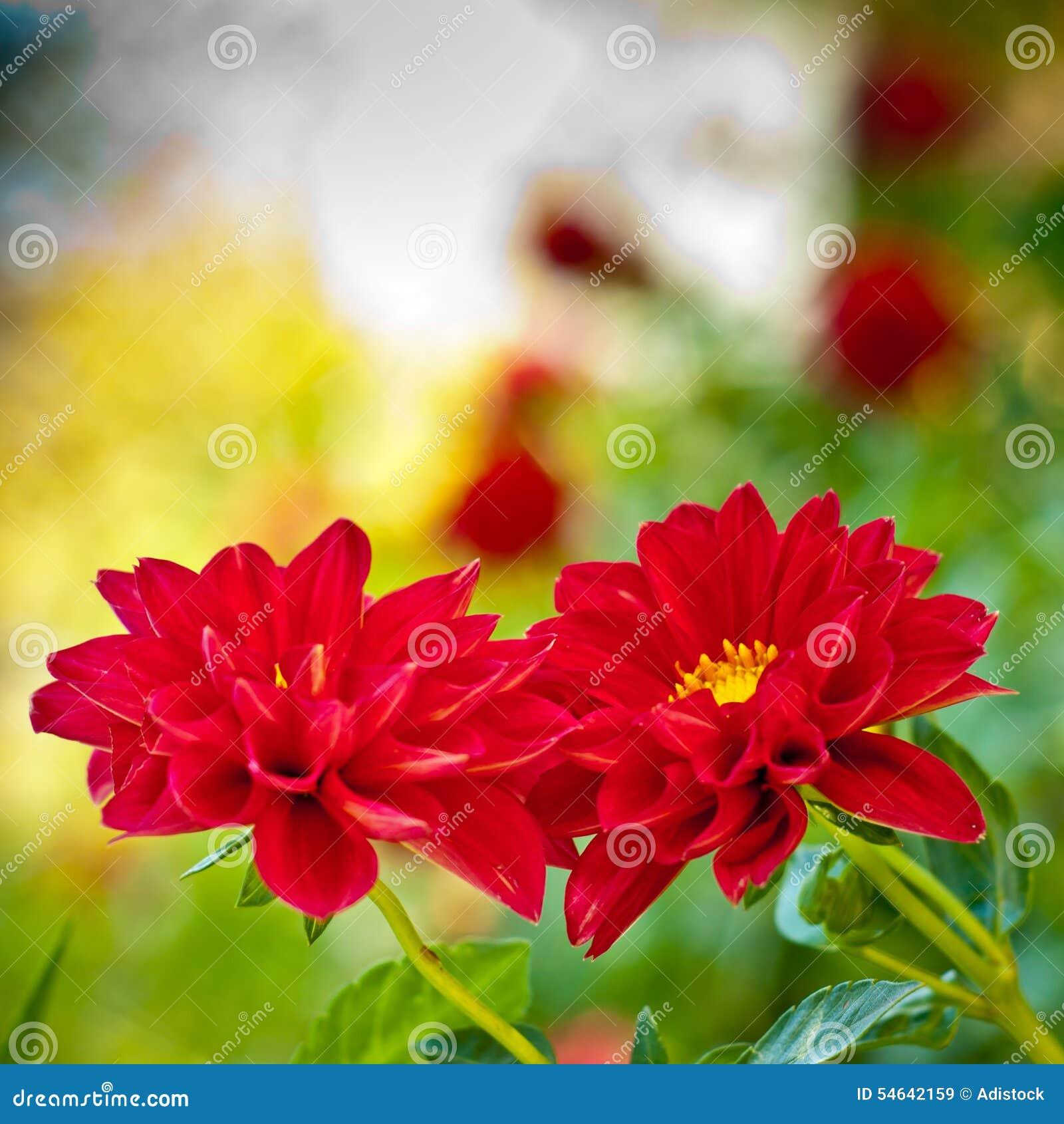 fond rouge de fleur fleur d 39 automne image stock image du. Black Bedroom Furniture Sets. Home Design Ideas