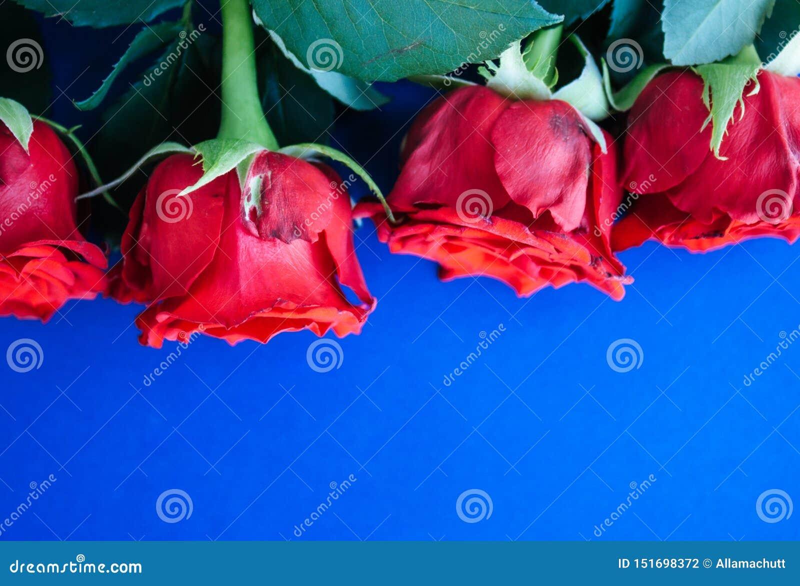 Fond rouge de roses