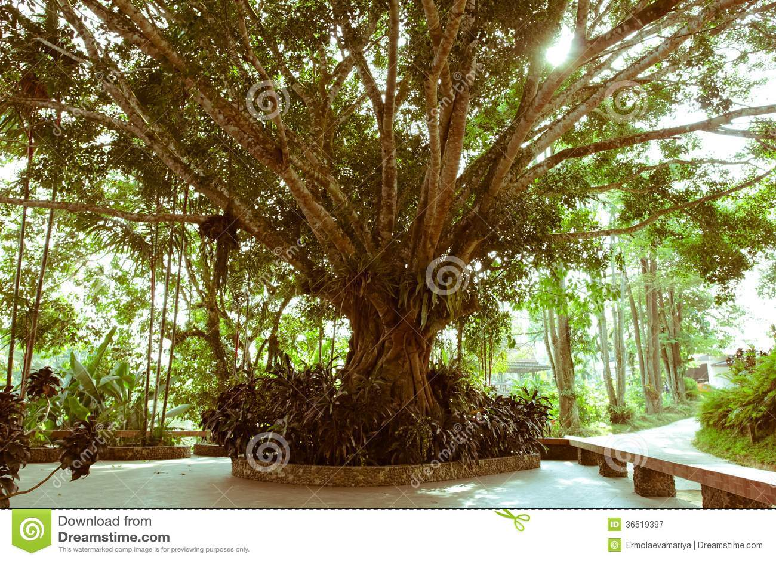Fond scénique de forêt de jungle.