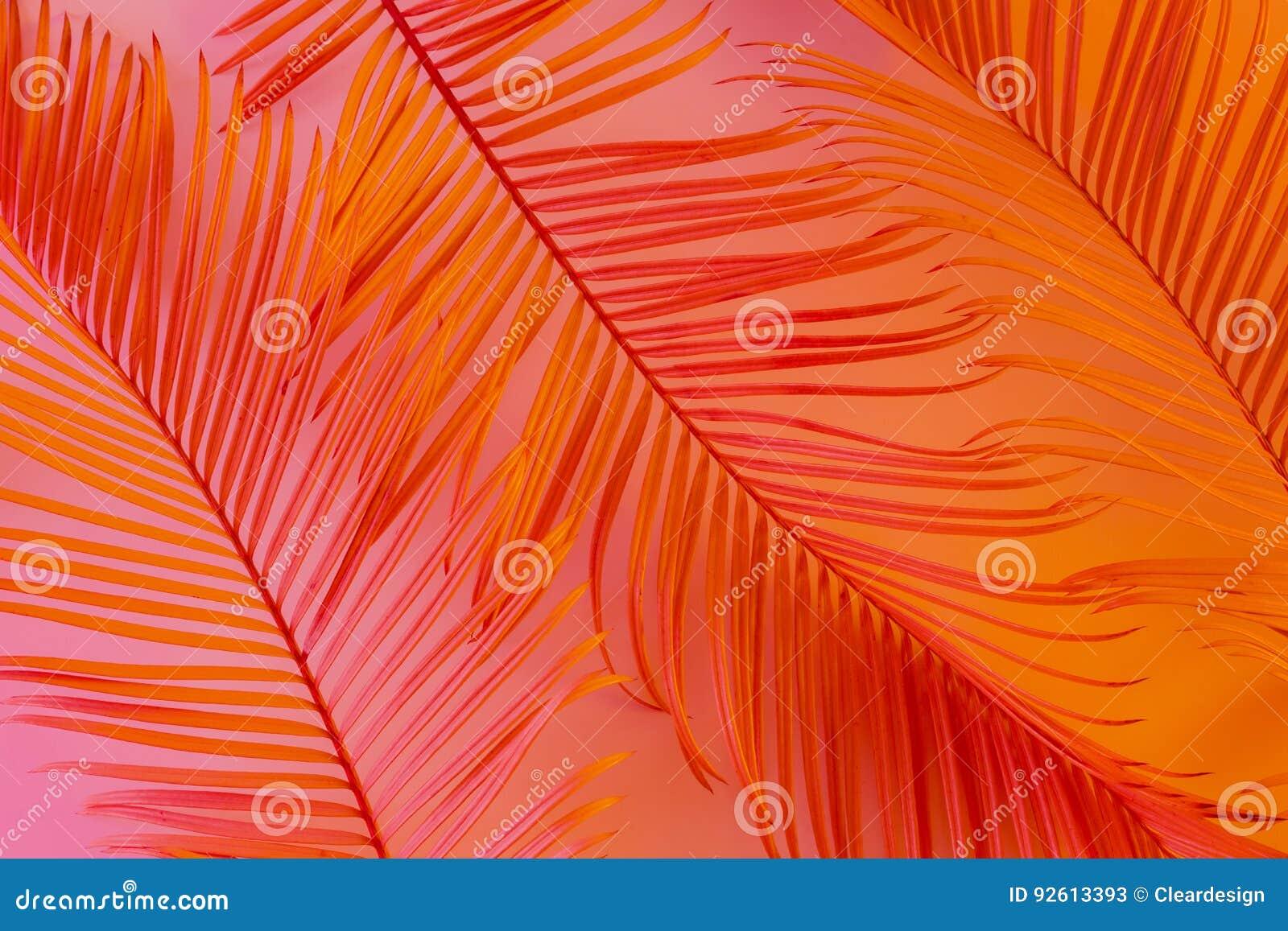 Fond tropical d été - feuilles exotiques colorées