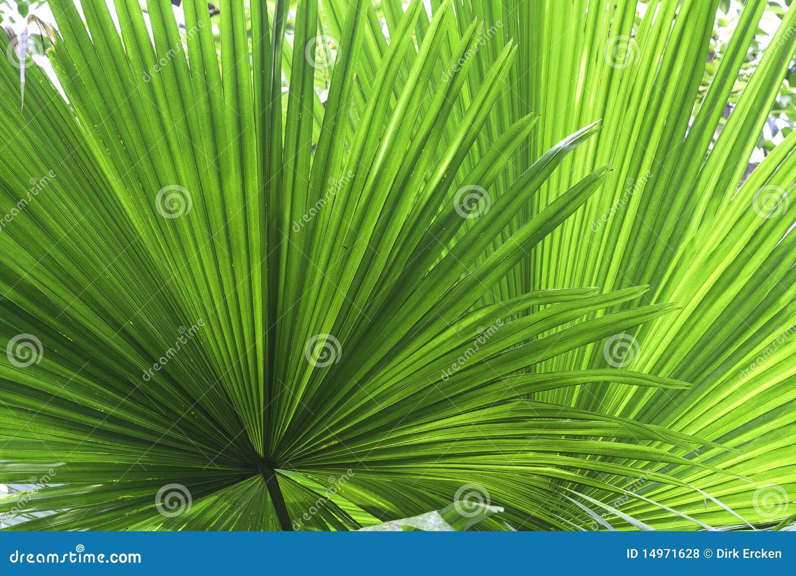 Fond tropical de texture de vert de détail de lame