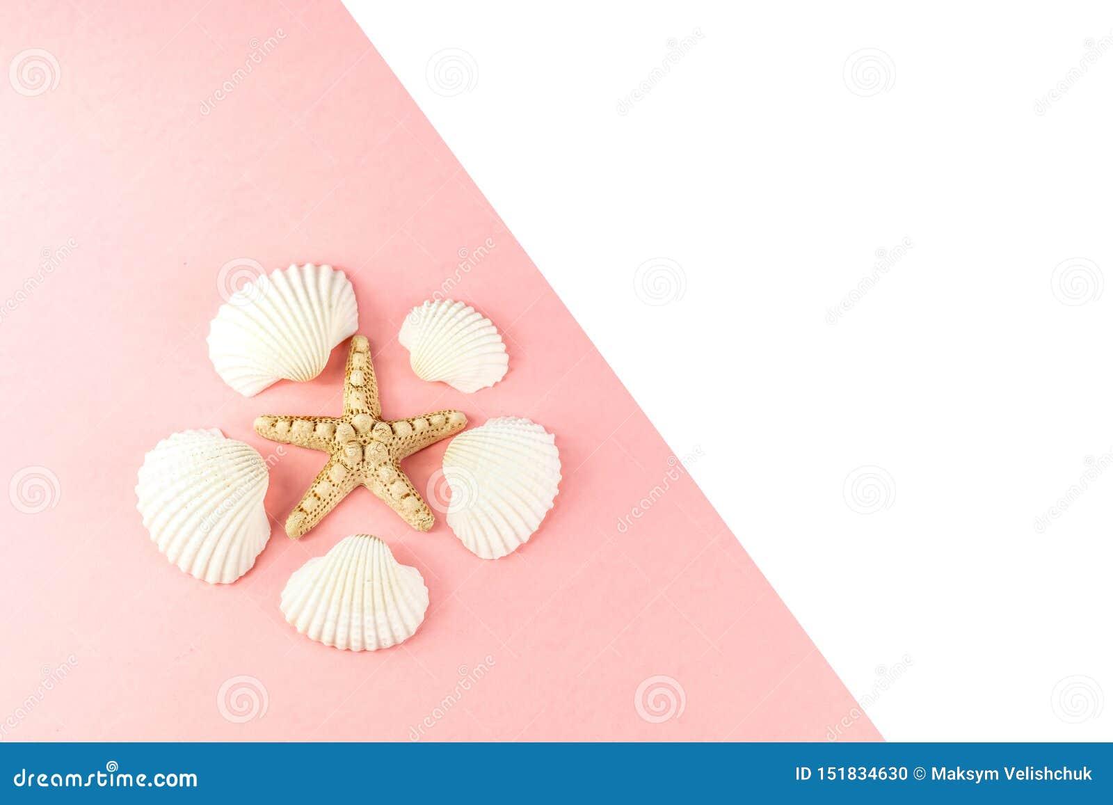 Fond tropical de vacances d ?t? Étoiles de mer entourées par les coquillages blancs sur un fond rose Copiez l espace, vue sup?rie
