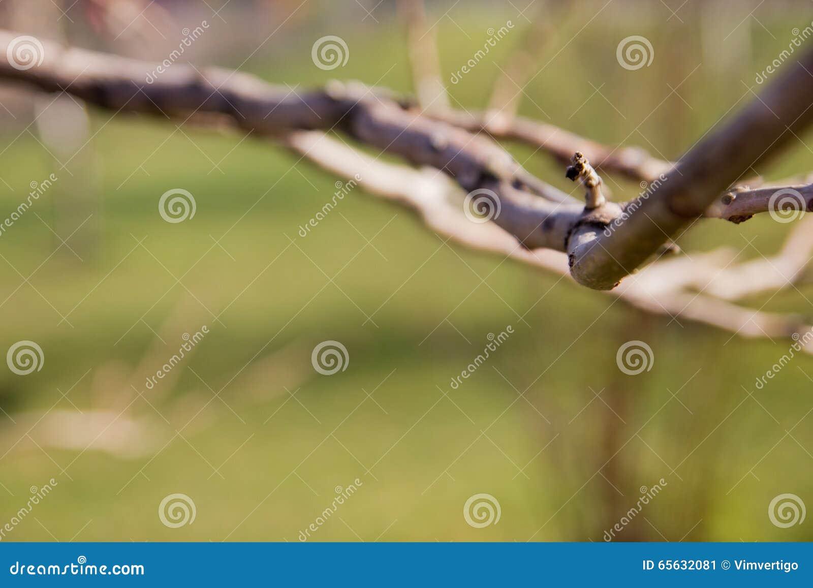 Fond vert abstrait ensoleillé de nature, foyer sélectif