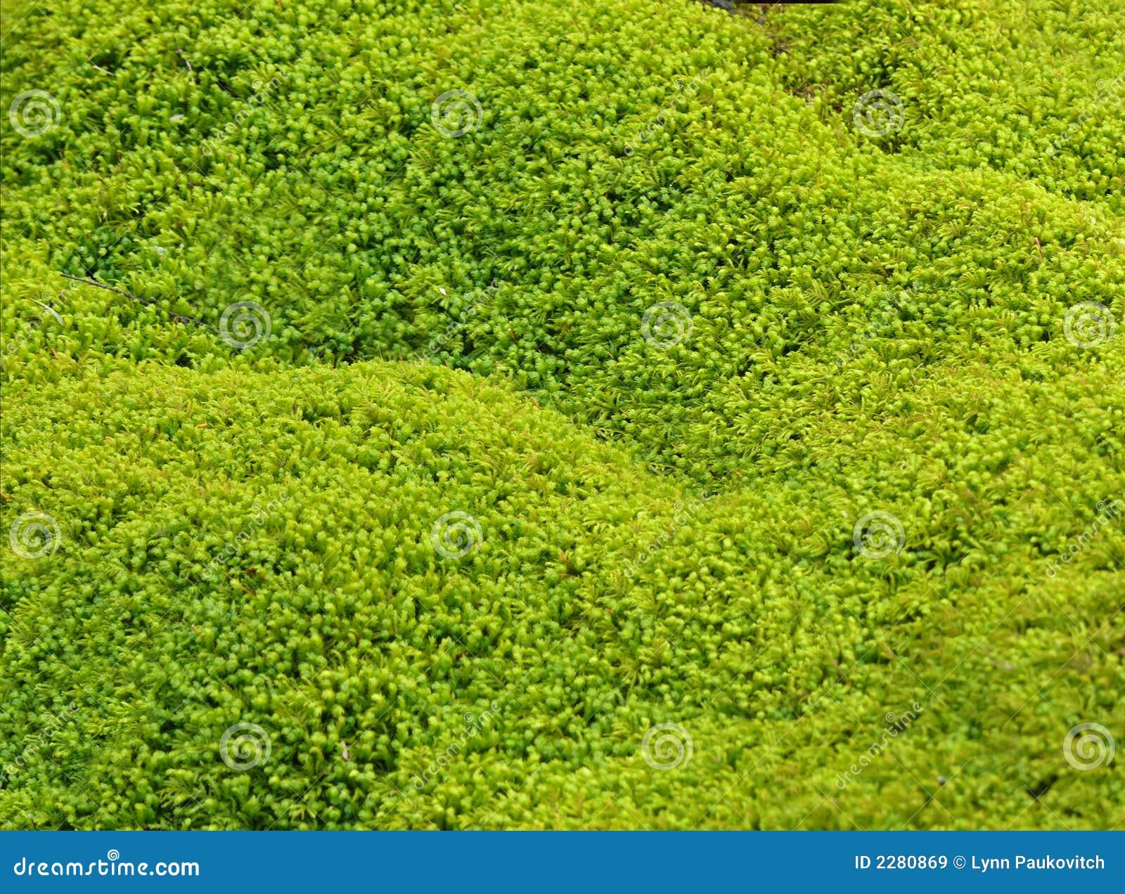 fond vert de texture de mousse images libres de droits image 2280869. Black Bedroom Furniture Sets. Home Design Ideas