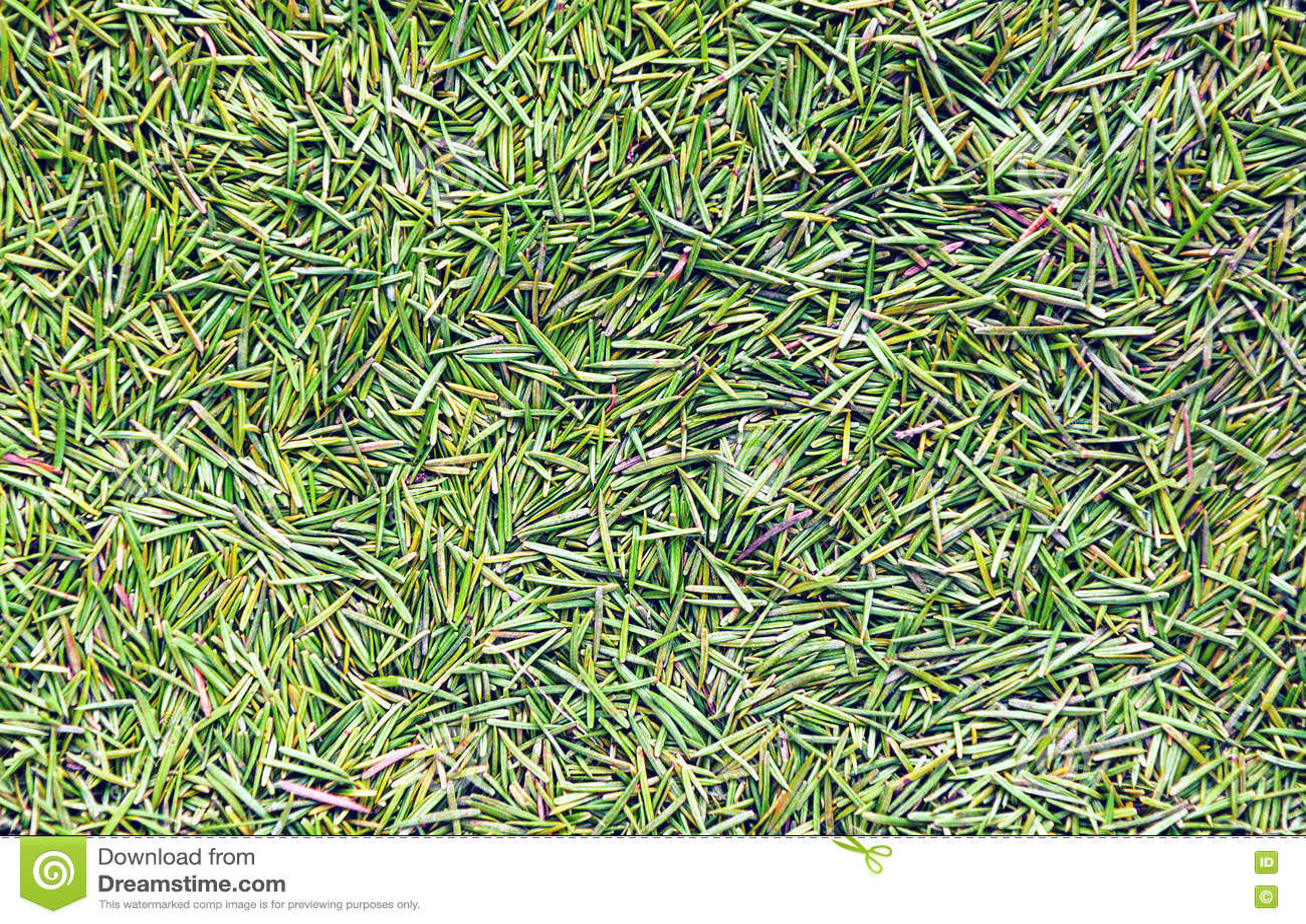 Fond vert de transitoire de pin