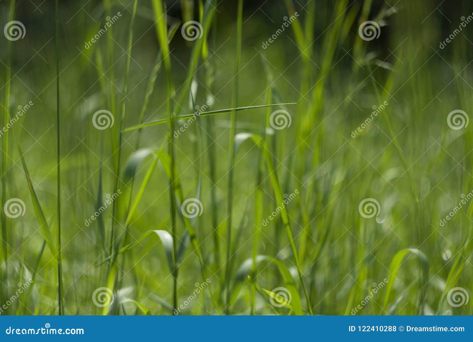 Fond vert parfait par l herbe fraîche