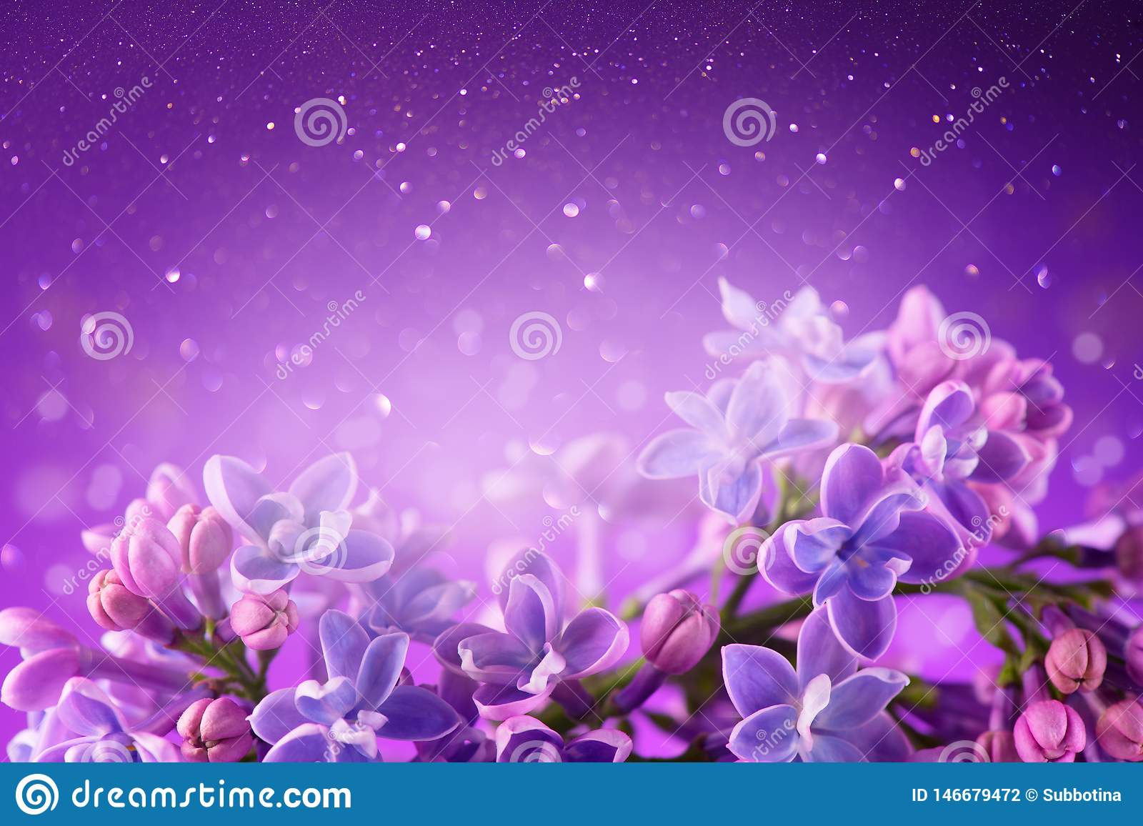 Fond violet de conception d art de groupe de fleurs de lilas Beau plan rapproché lilas violet de fleurs
