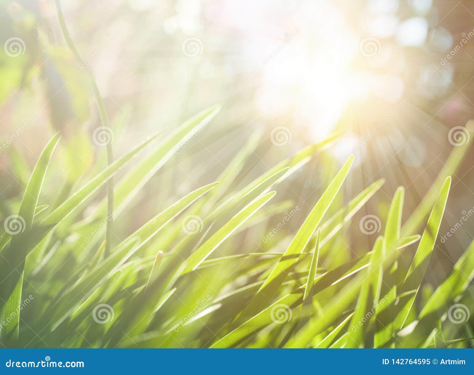 Fondo abstracto de la primavera o de la naturaleza del verano con el prado de la hierba verde