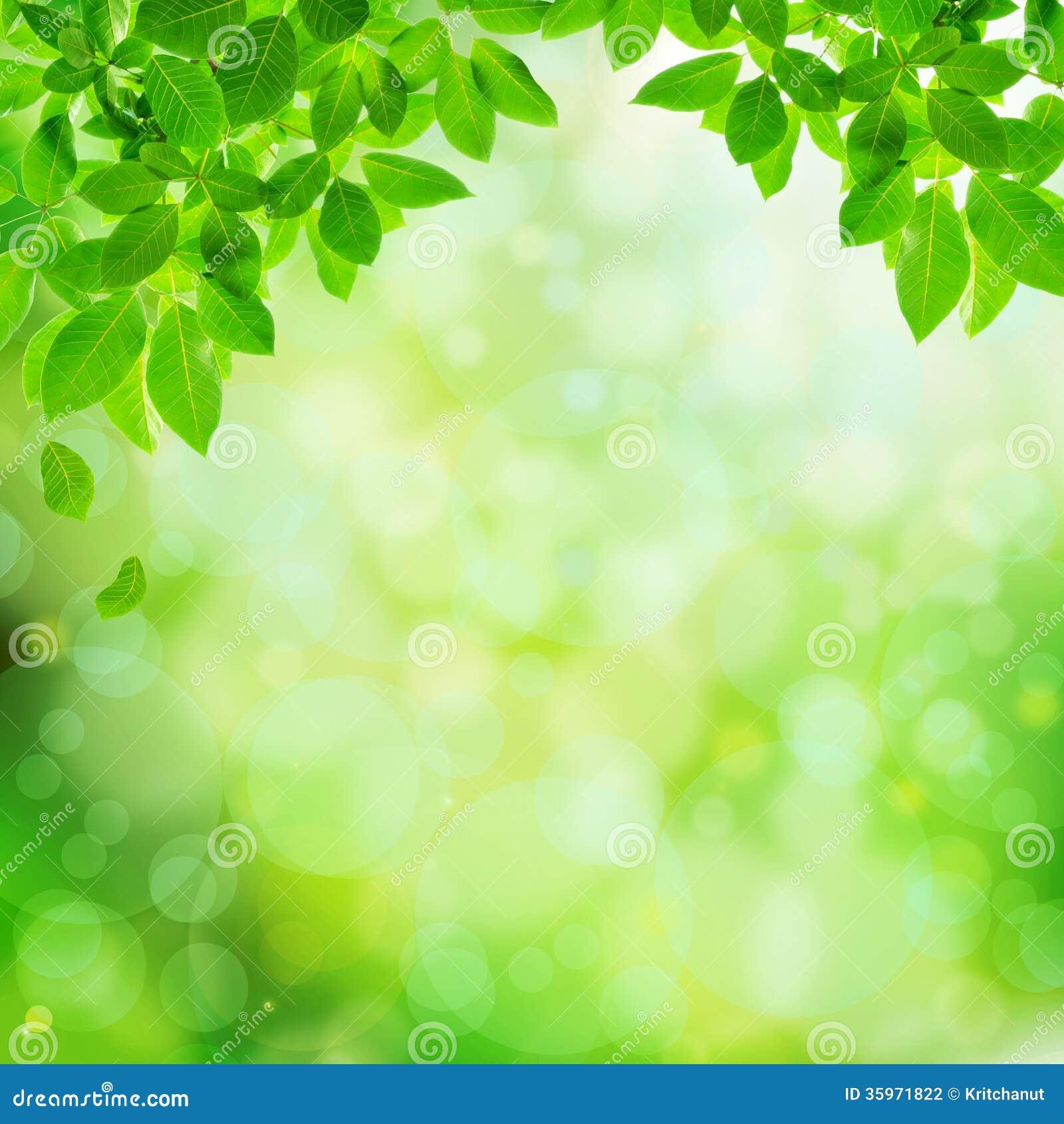 Fondo abstracto natural verde