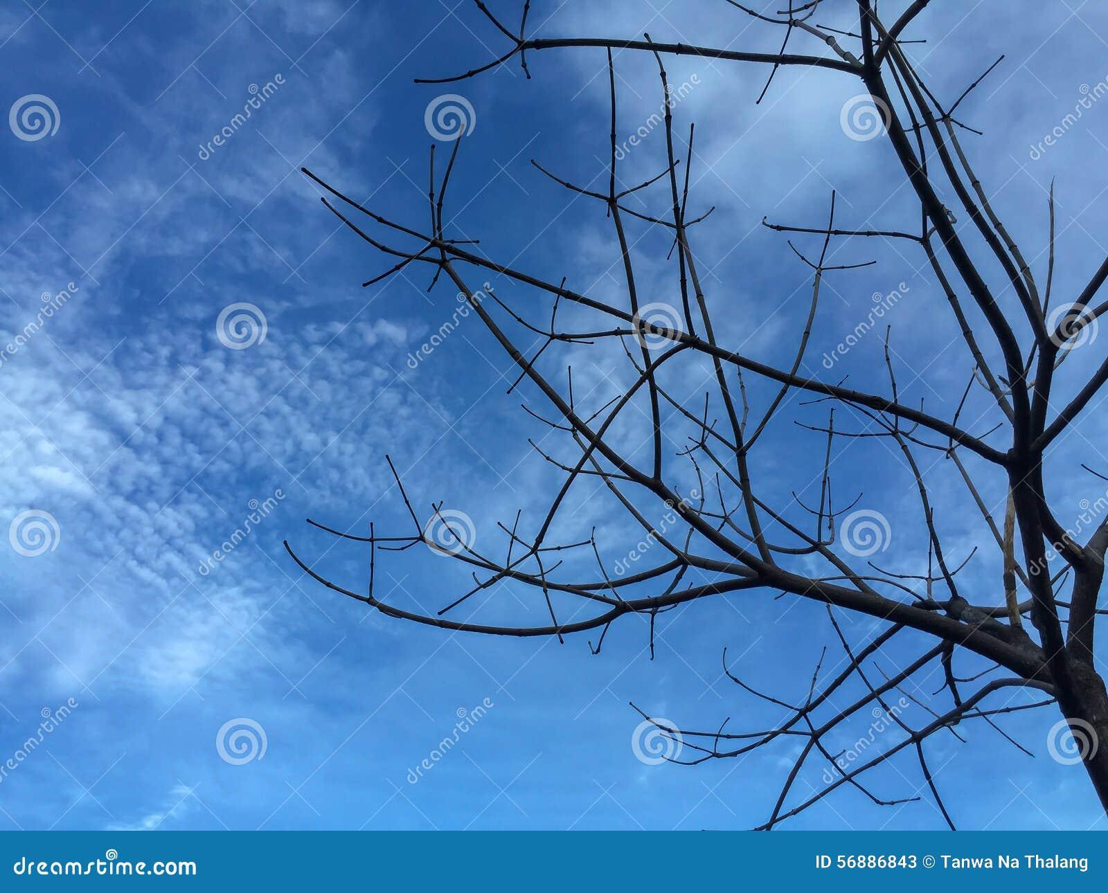 Fondo asciutto del cielo blu e dell albero