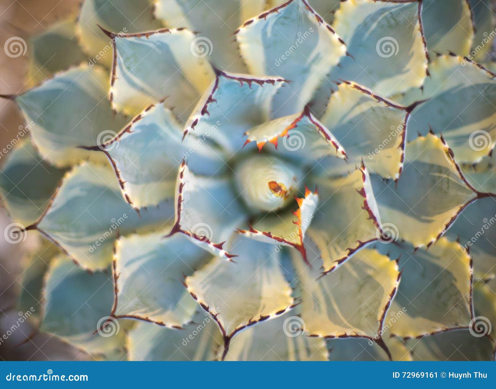 Fondo astratto - fondo molle del cactus dell estratto del fuoco