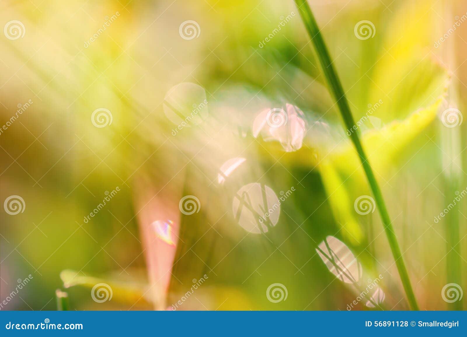 Fondo astratto vago con erba verde