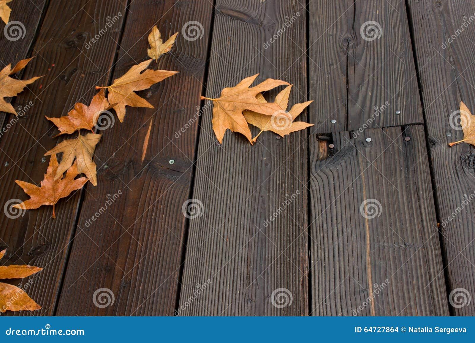Fondo bagnato delle foglie di rosso e dell albero